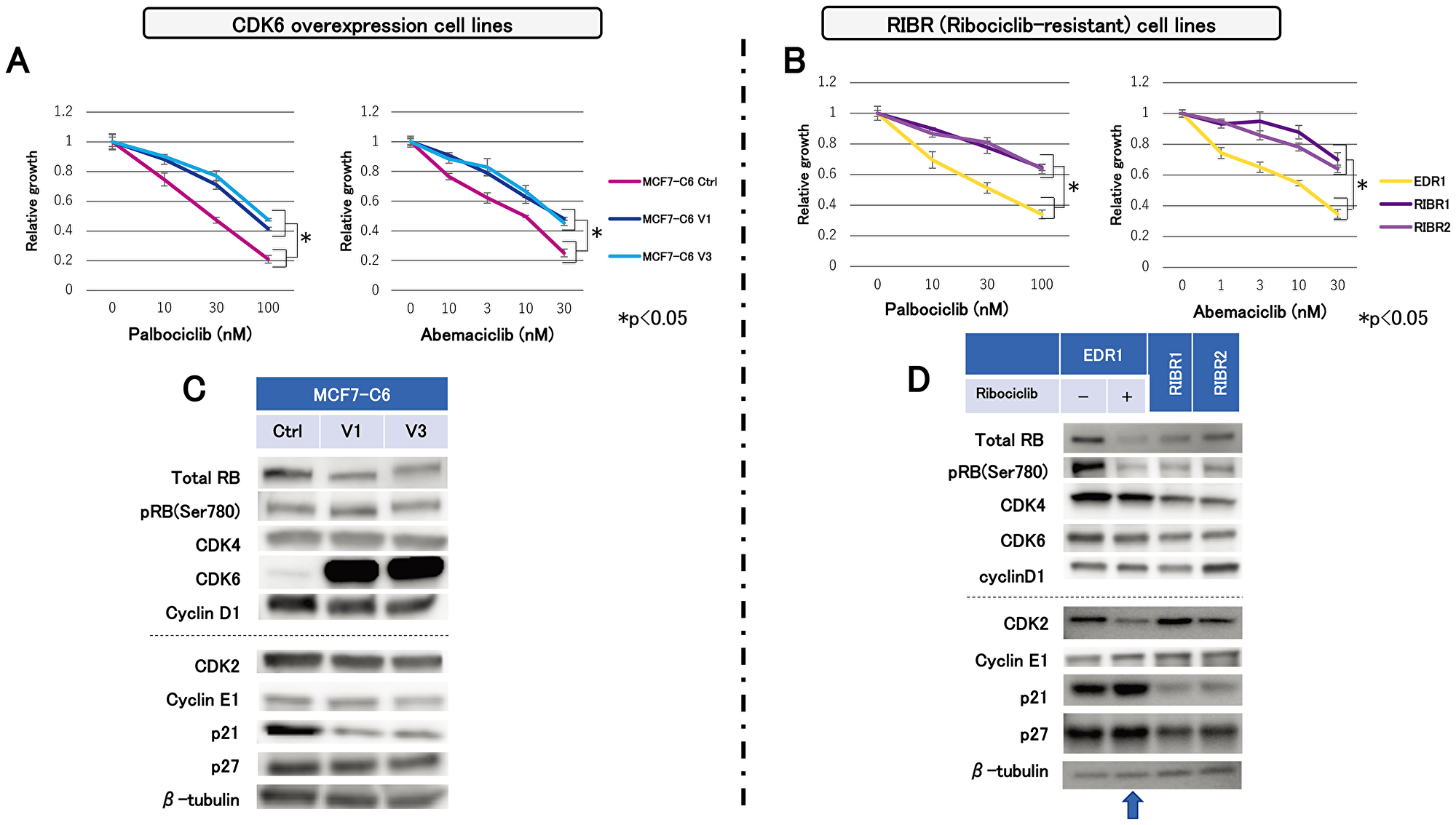 Sensitivity to other CDK4/6 inhibitors and molecular-targeted drugs and expression levels of cell-cycle regulatory agents.