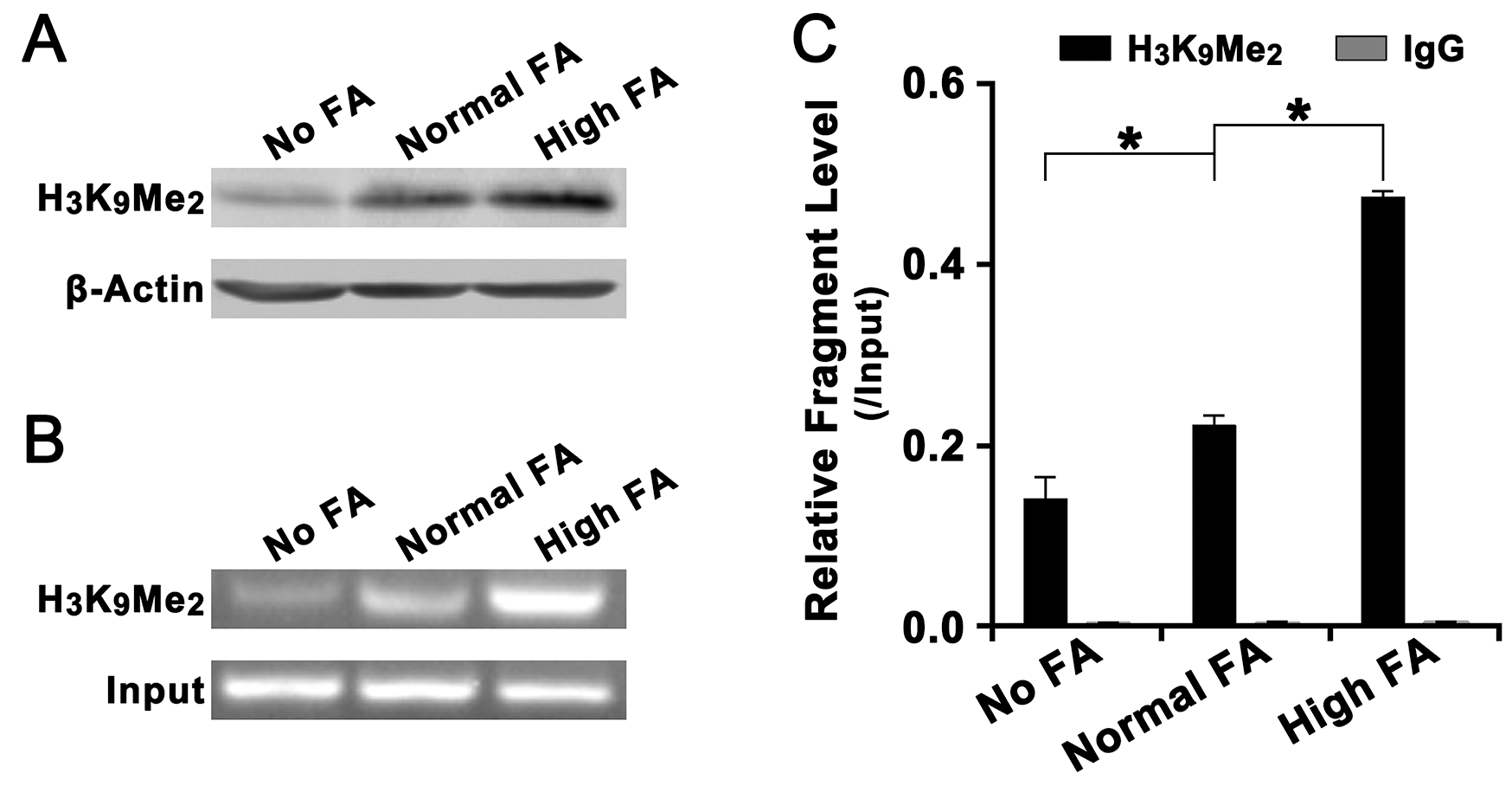 Effect of FA on the level of histone H3K4Me2 in the promoter of LCN2.