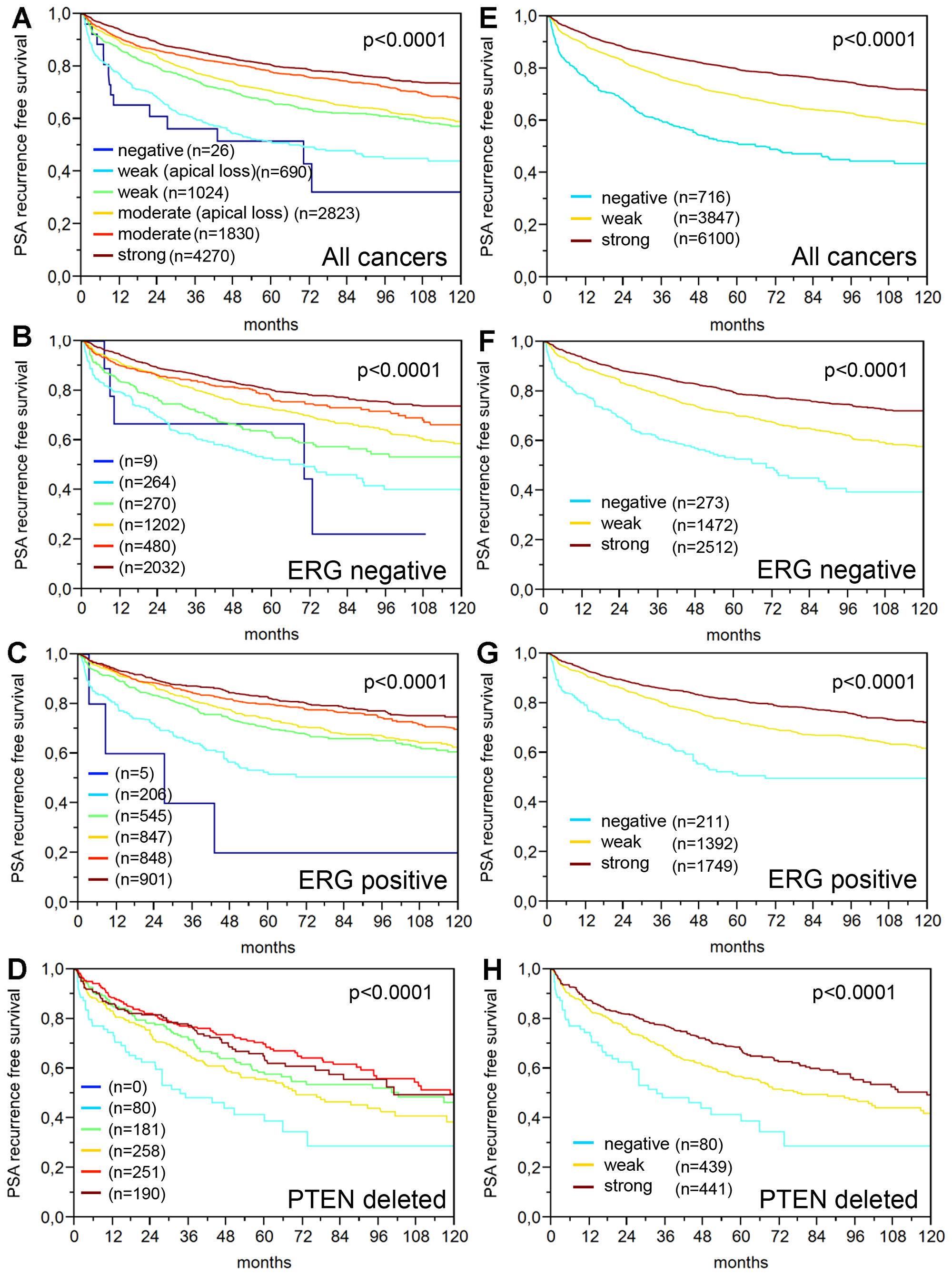 Prognostic relevance of the PSA staining in prostate cancer.