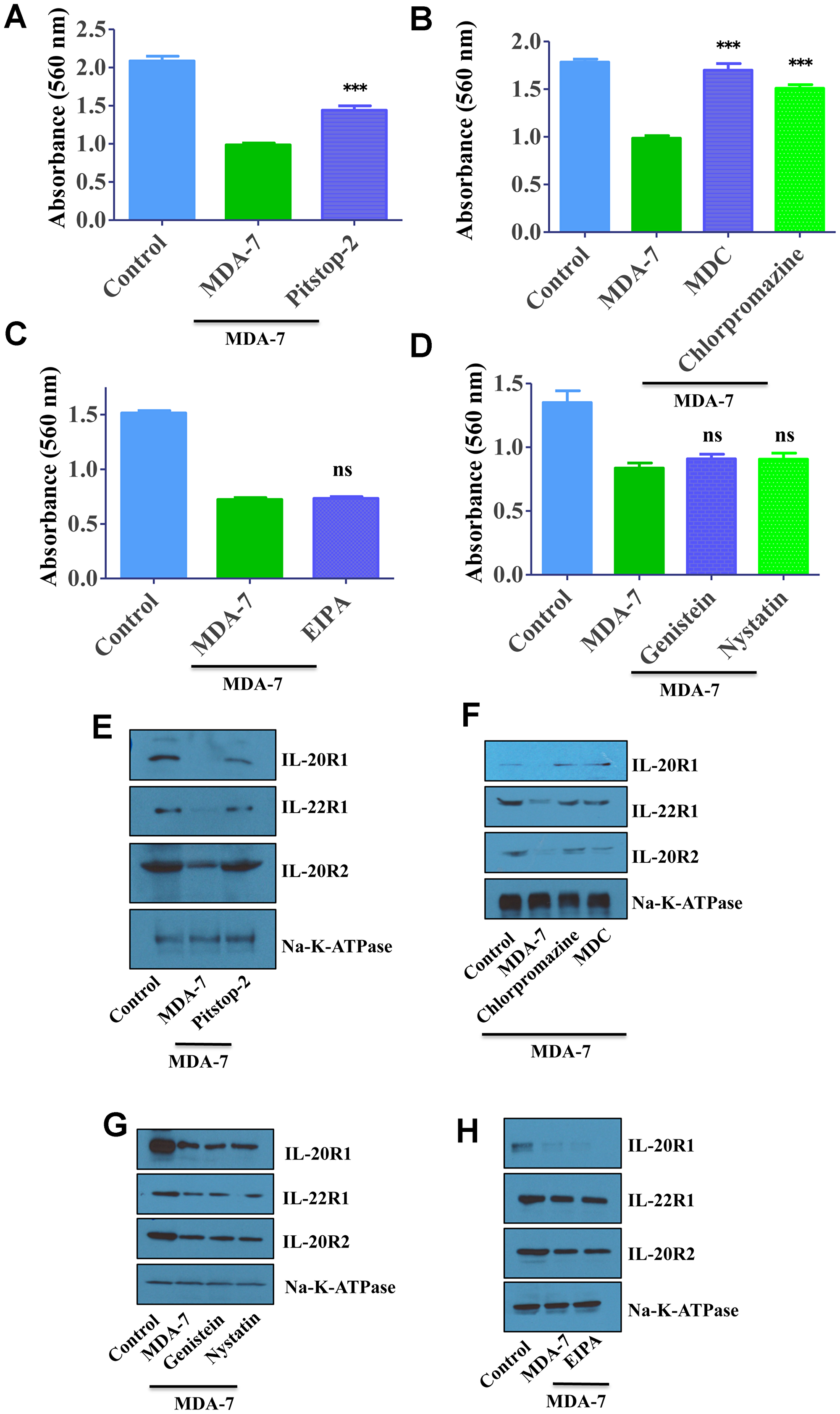 MDA-7/IL-24 uses the clathrin-mediated endocytic (CME) pathway.