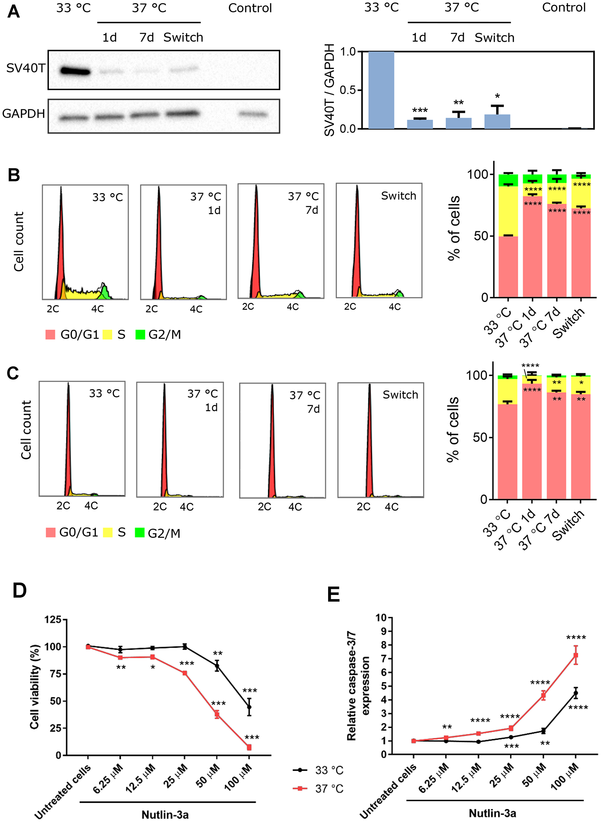 Temperature-dependent effect of SV40T expression on ciPTEC-OAT1 proliferation and apoptosis-sensitivity.