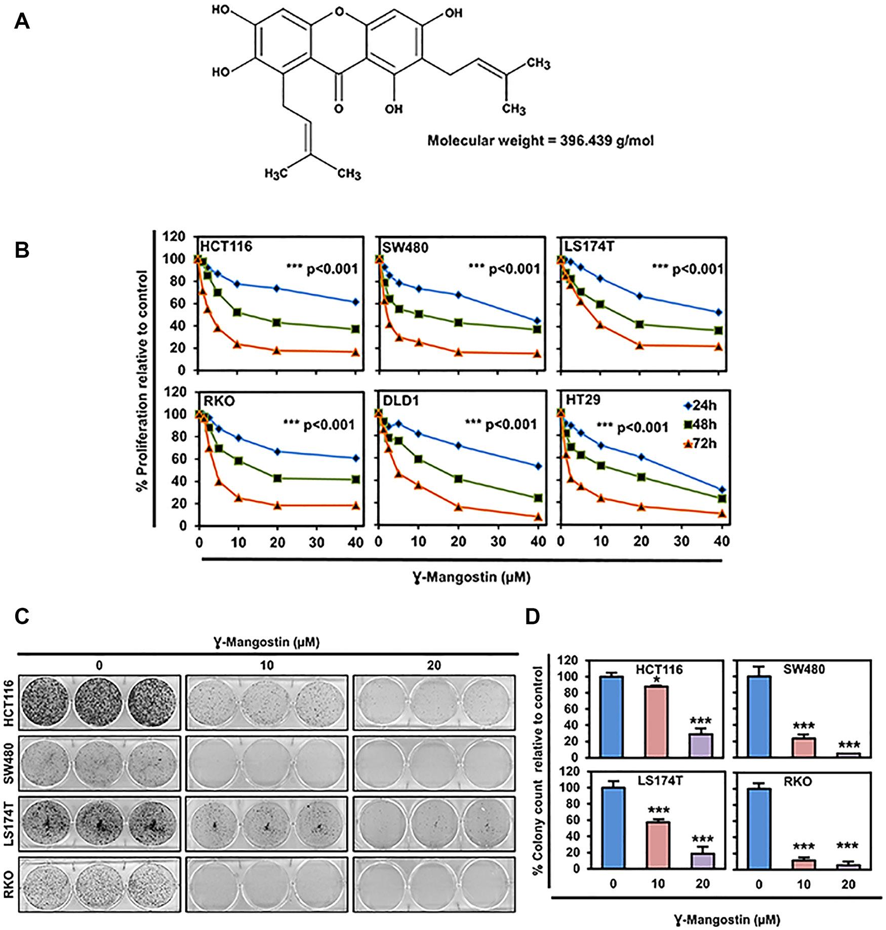 γ-Mangostin inhibits colon cancer cell proliferation.