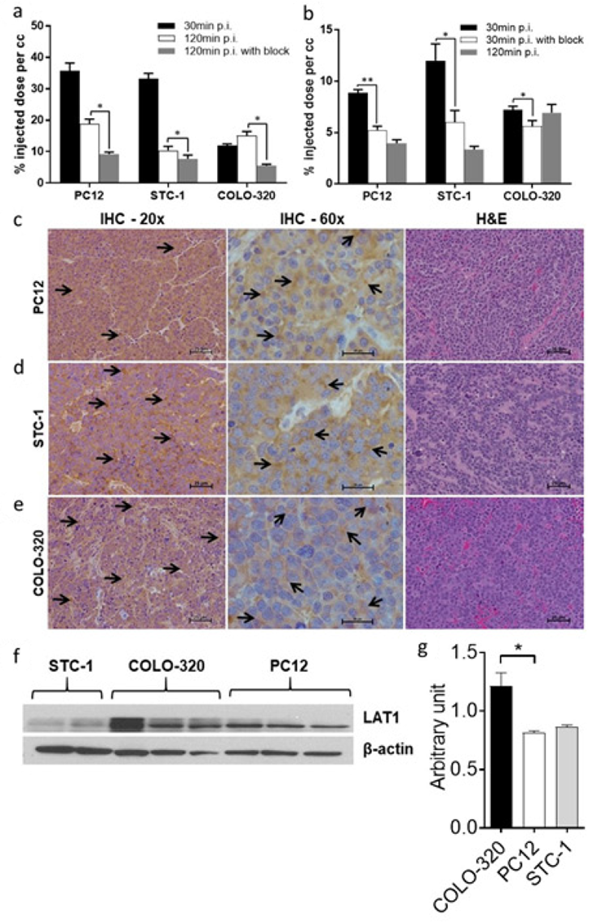 Analysis of PET images and excised tumor tissues.