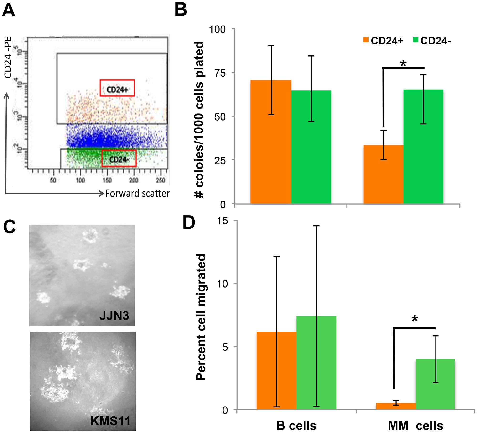 CD24 up-regulation on MM cells decreases tumorigenicity.