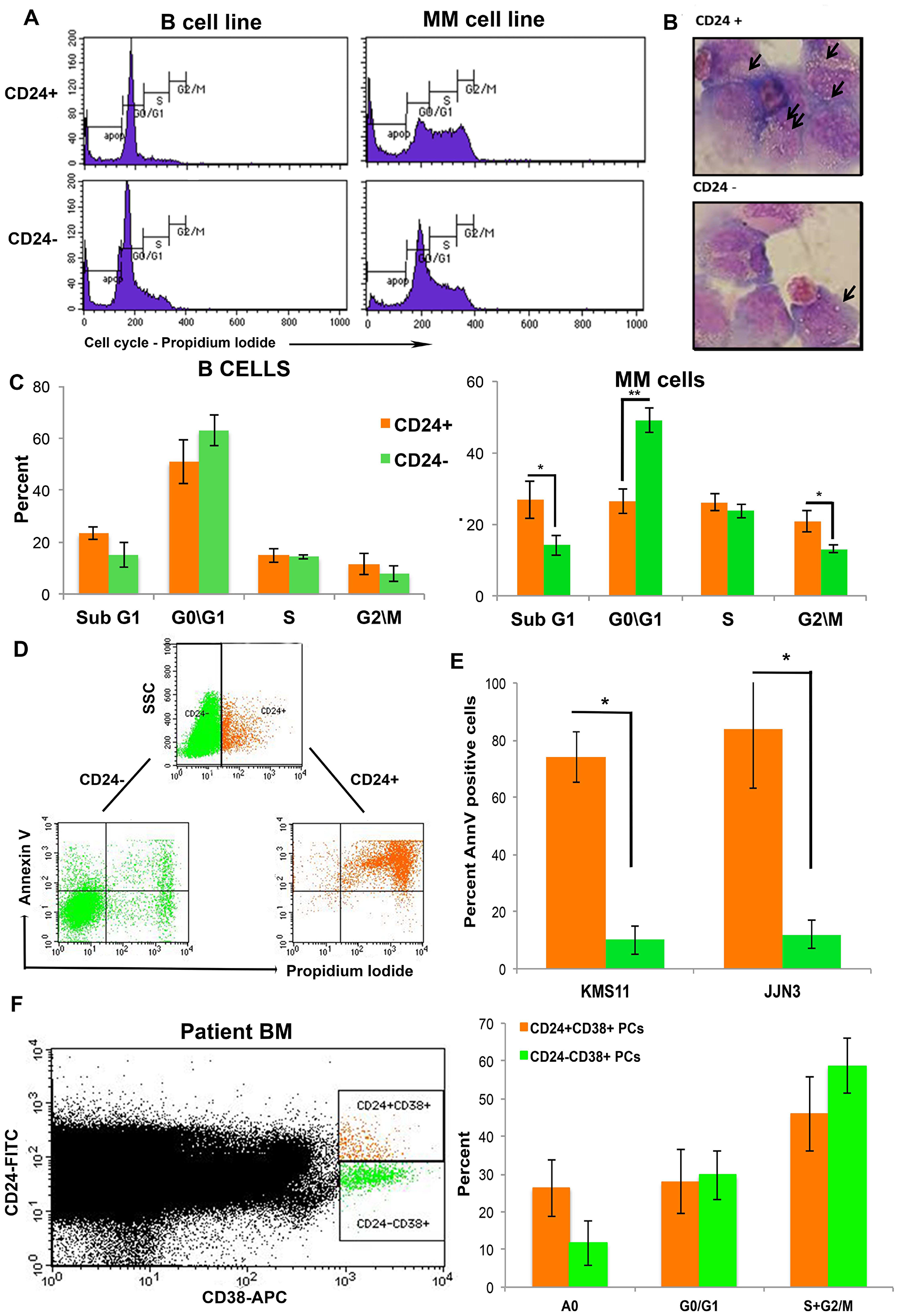 Up-regulation in CD24 expression correlates with increased apoptosis in MM cells.