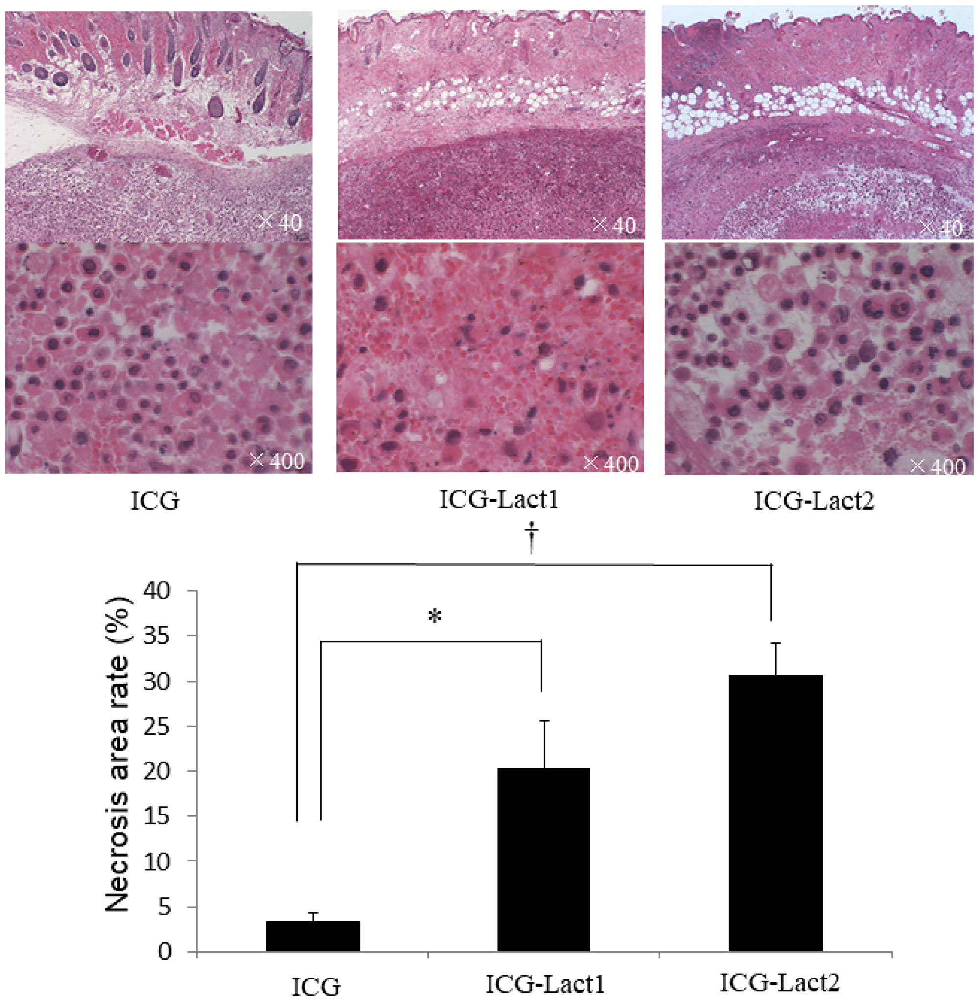 Effect of PDT on necrosis of subcutaneous tumors in the ICG and ICG-lactosomes mice.