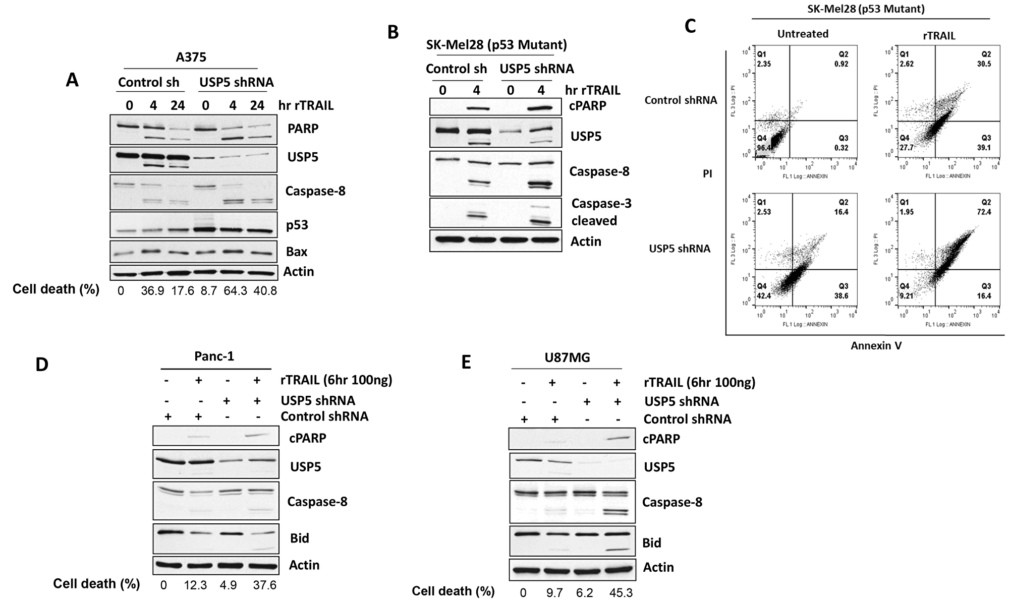 USP5 regulates apoptotic responsiveness to TRAIL.