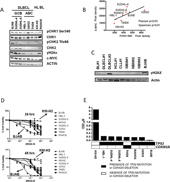 The CHK inhibitor PF-0477736 shows potent antiproliferative activity in aggressive B-cell lymphoma cells.