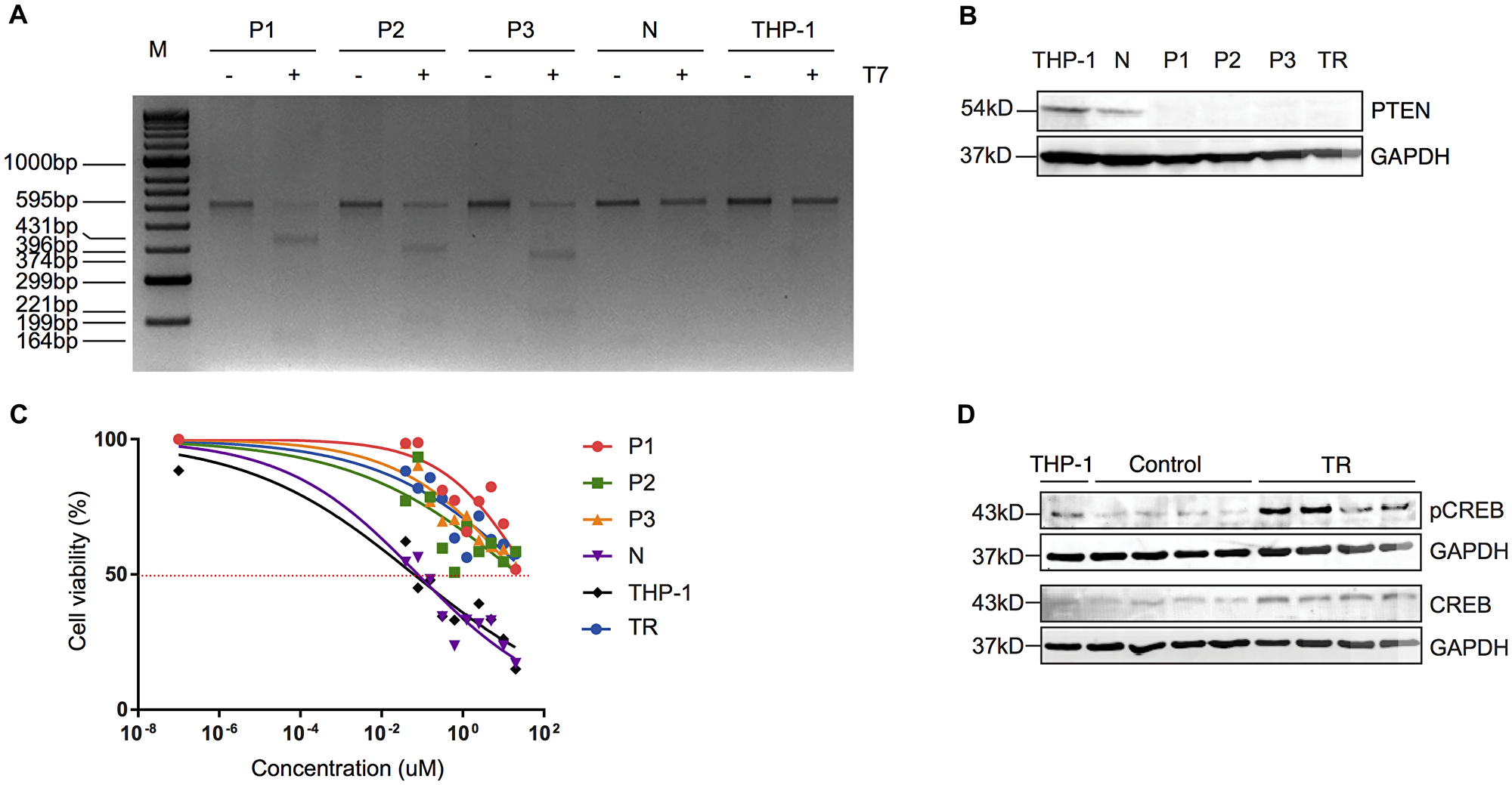 Truncated PTEN is associated with resistance to MEKi via increased activity of CREB.
