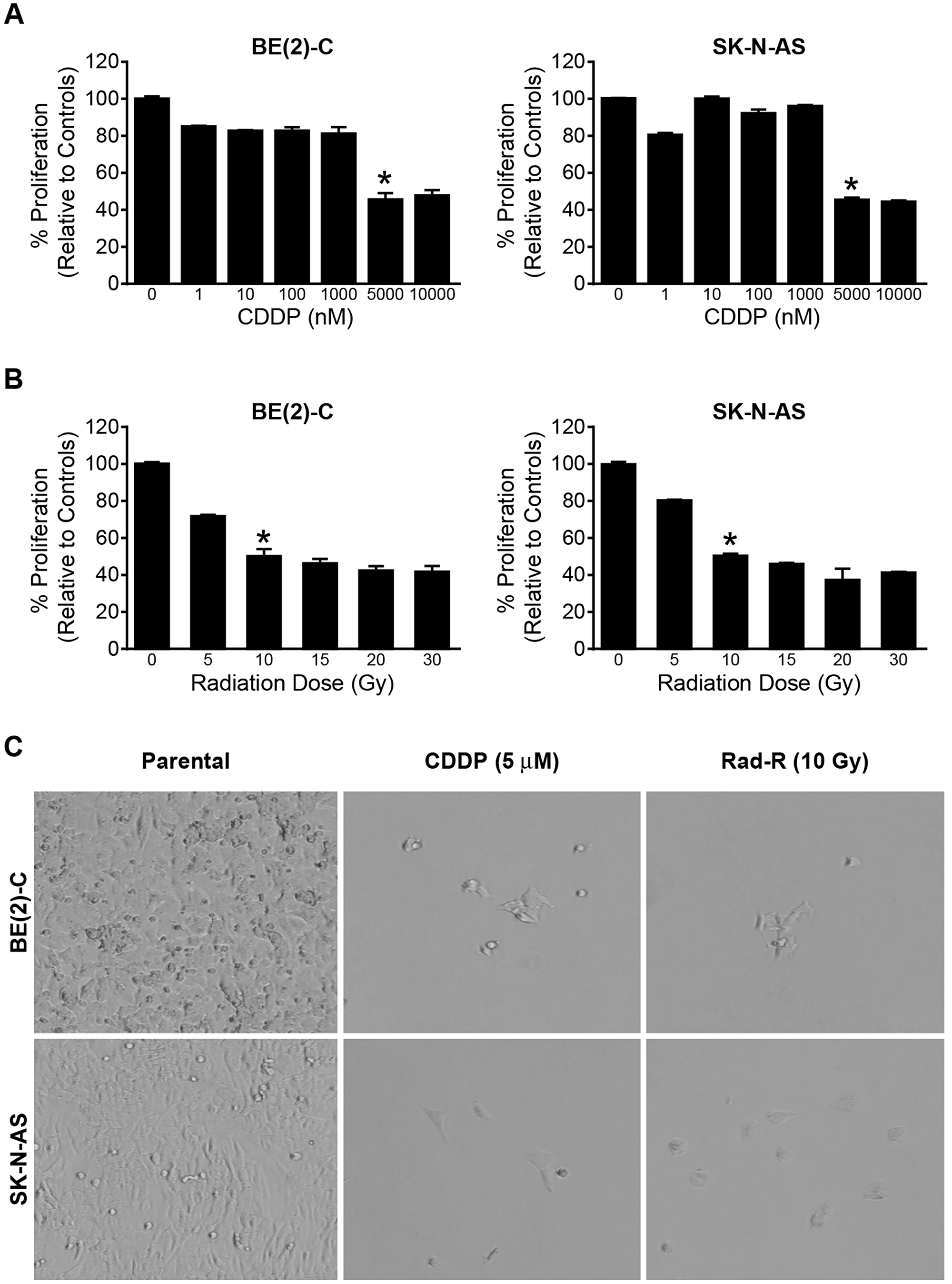 Drug/radiation selected human neuroblastoma cells in a dose-dependent manner.