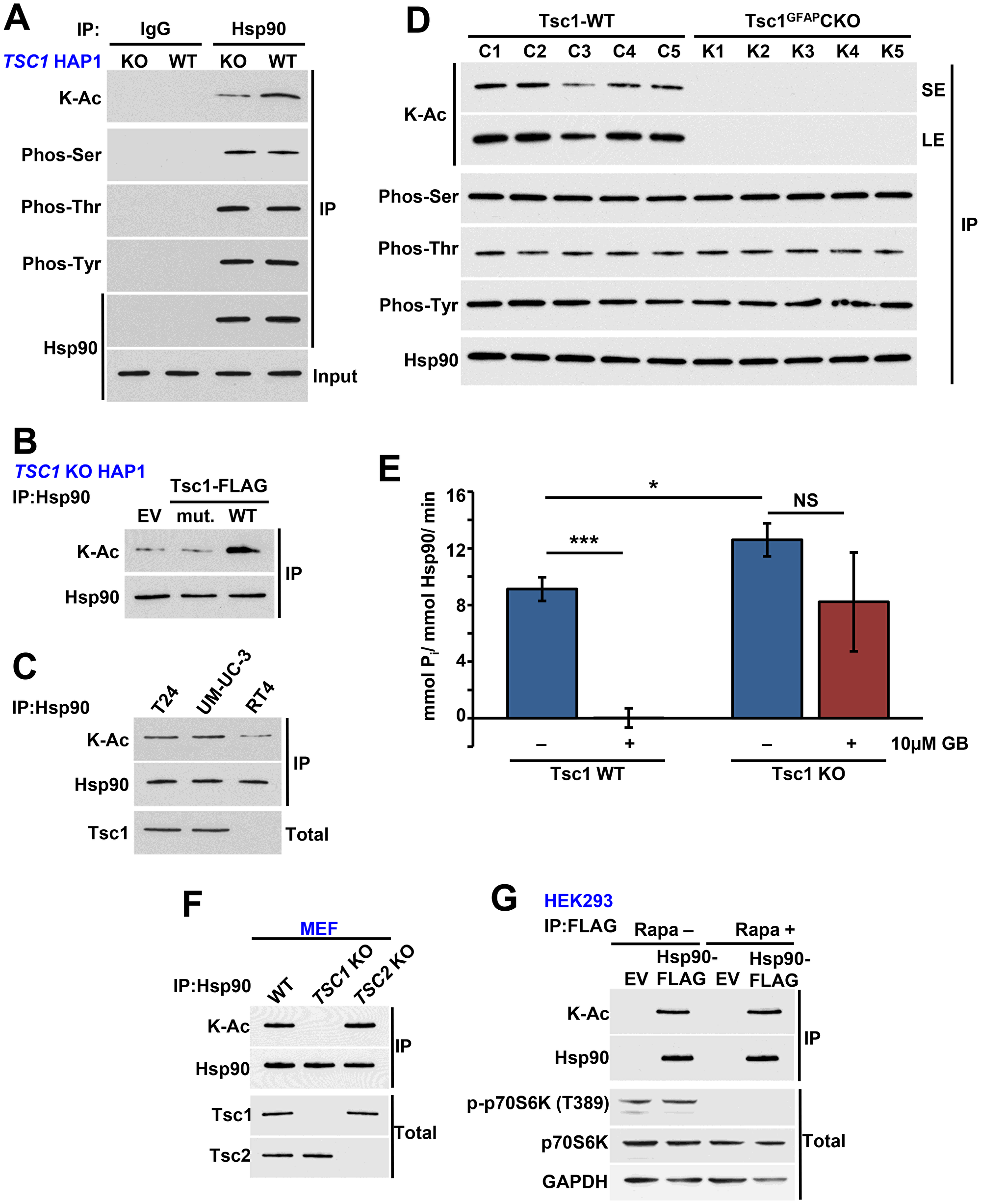Tsc1 facilitates acetylation of Hsp90.