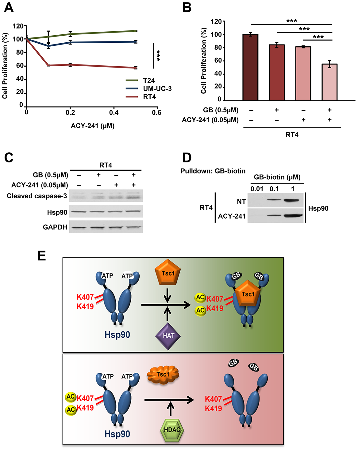 HDAC inhibition synergizes with Hsp90 inhibition to induce apoptosis in bladder cancer.