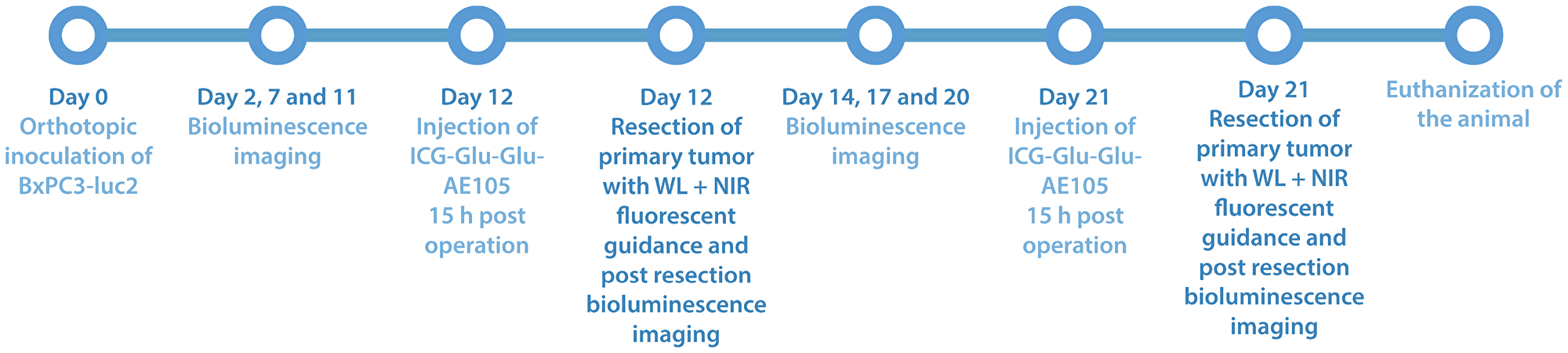 Study timeline over part II of the study, where white light surgery is compared with fluorescent guided surgery in 5 mice with ICG-Glu-Glu-AE105 was used as optical probe 15 h post iv. injection.