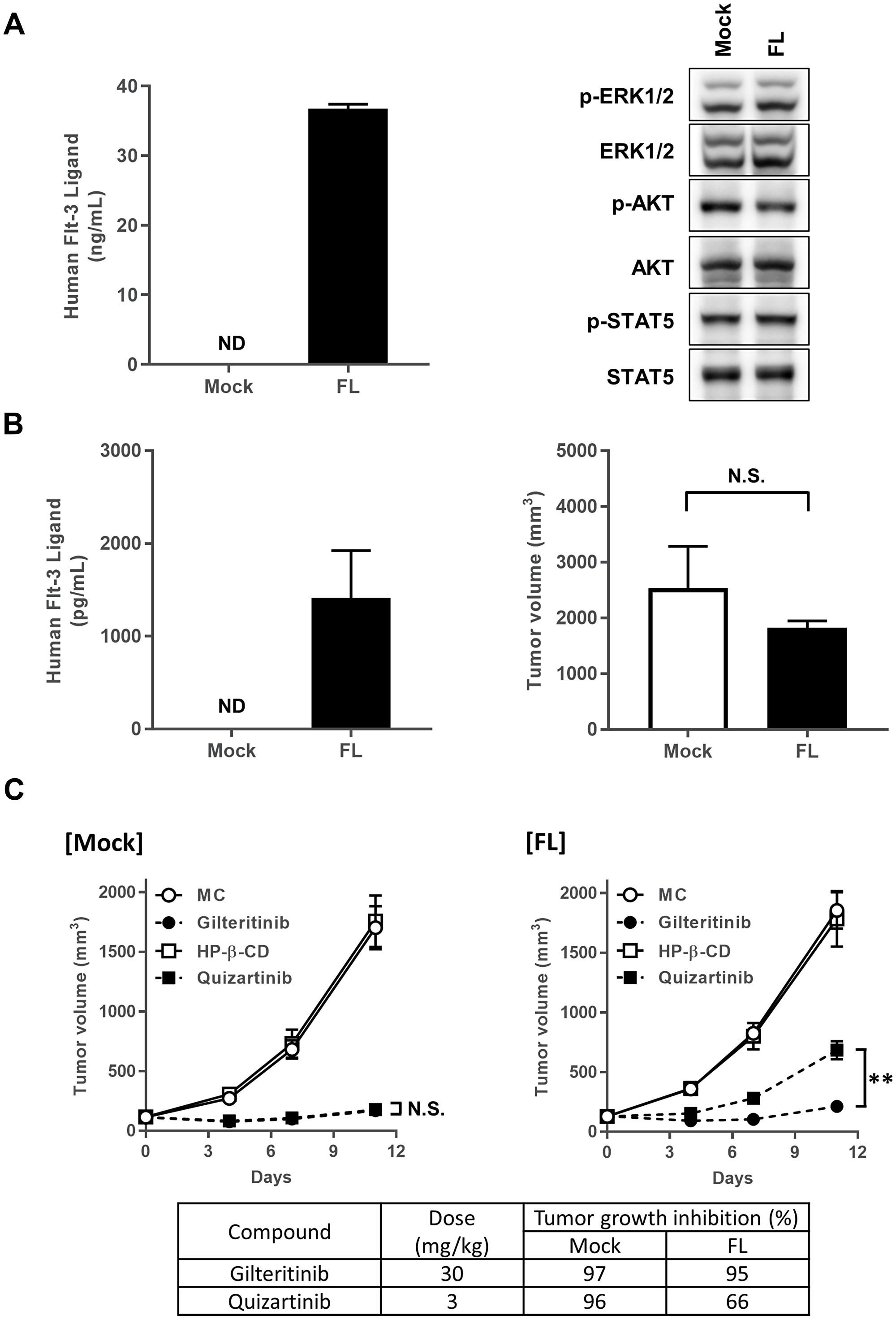 Antitumor efficacy of gilteritinib and quizartinib.