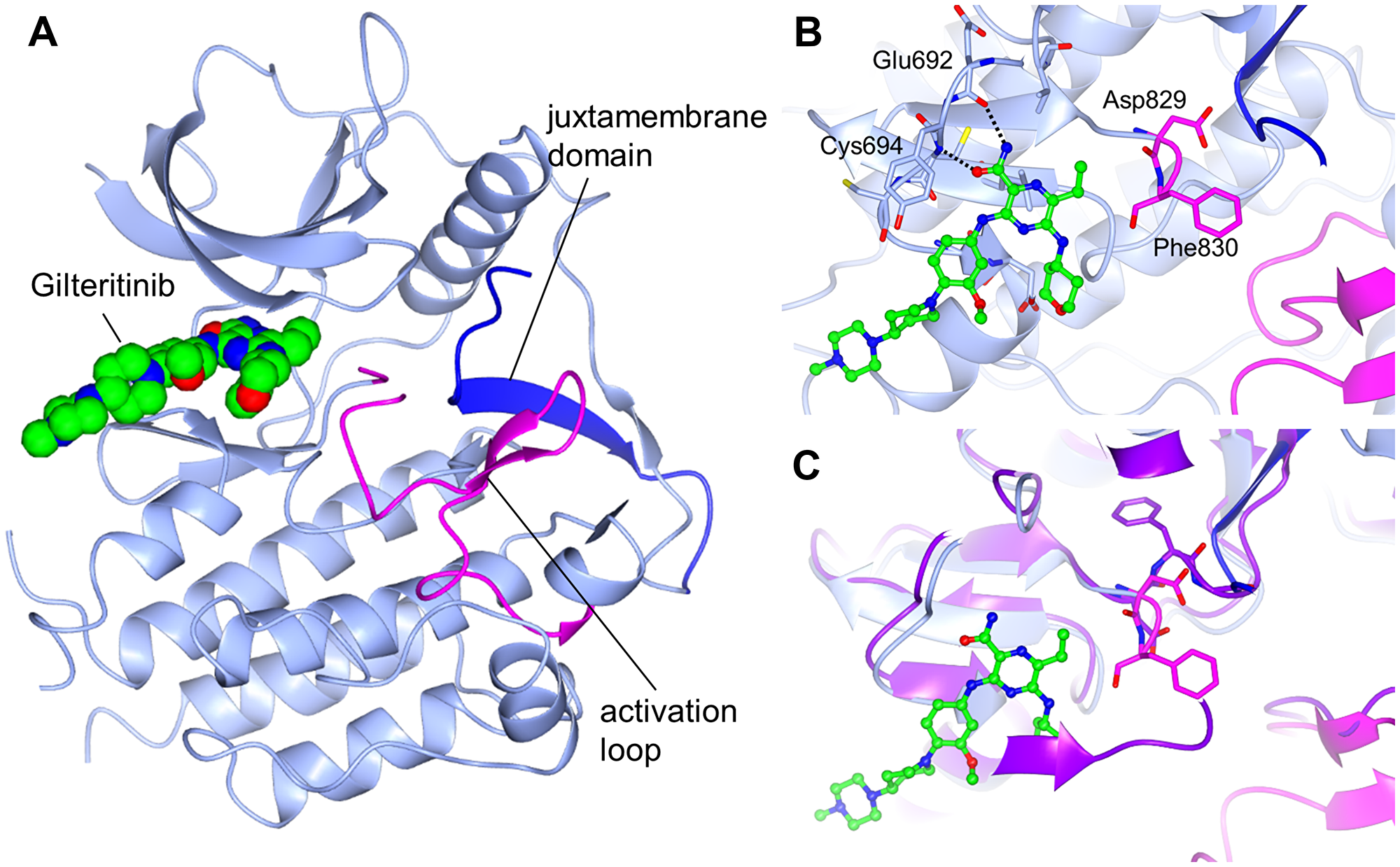 Crystal structure of FLT3 bound to gilteritinib.