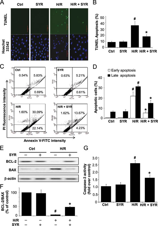 Syringaresinol protects cardiomyocytes against H/R-induced apoptosis.