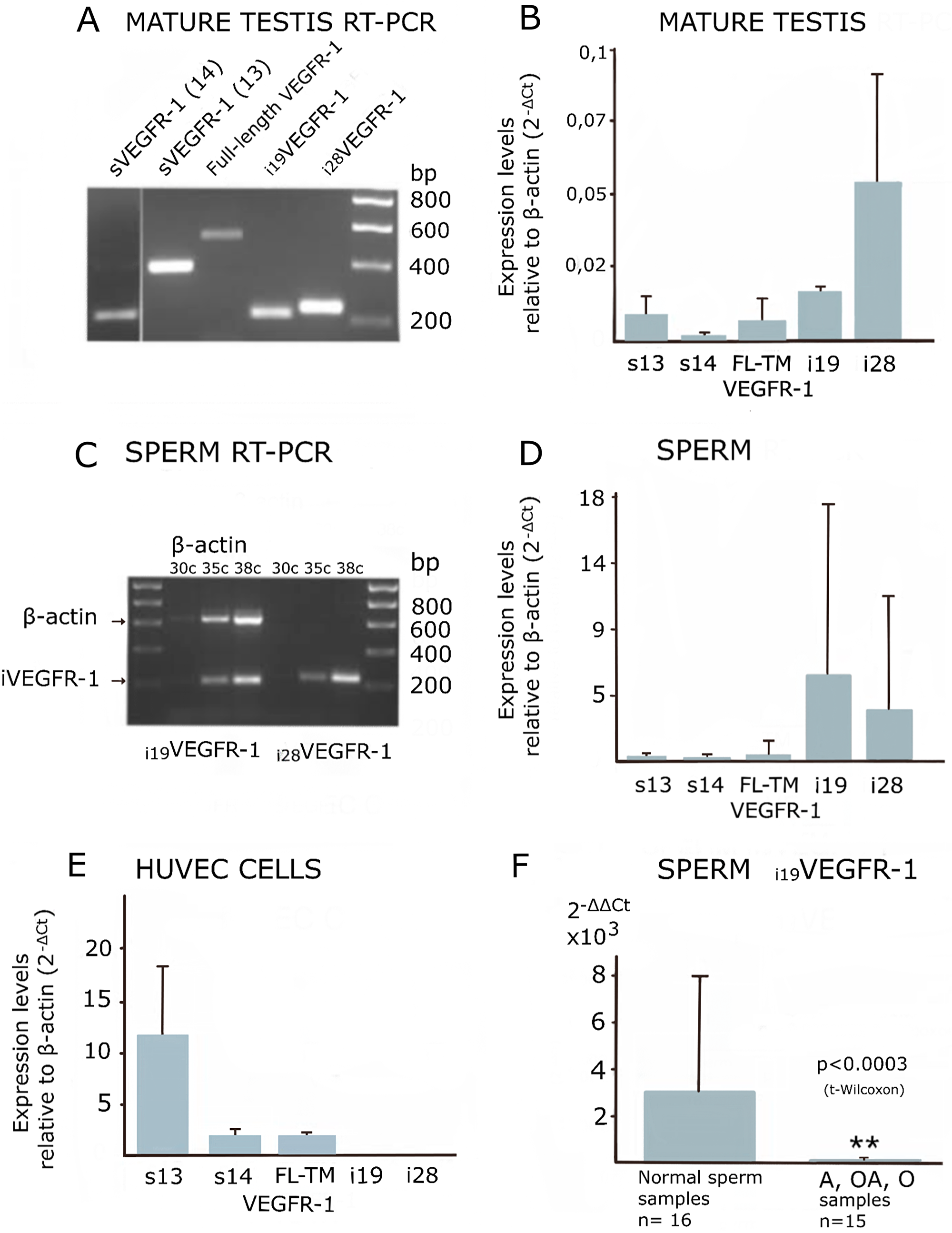 Expression of VEGFR-1 variants analyzed by manual, semi-quantitative and real-time PCR.