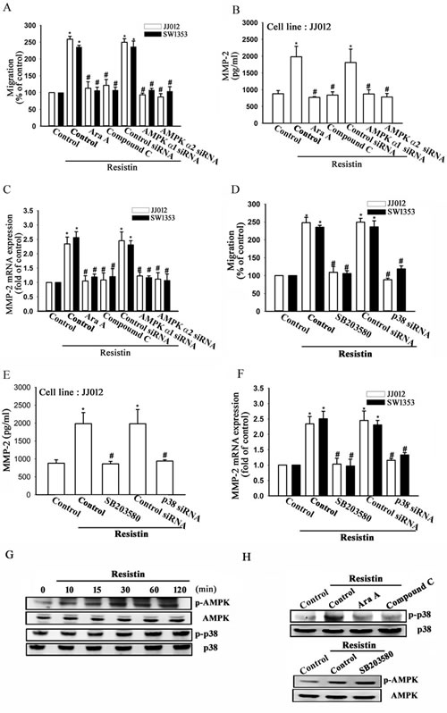 AMP-activated protein kinase (AMPK) is involved in resistin-induced matrix metalloproteinase (MMP-2) expression and cell migration.