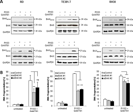 GANT61/PI103-mediated BAX/BAK activation is required for apoptosis.