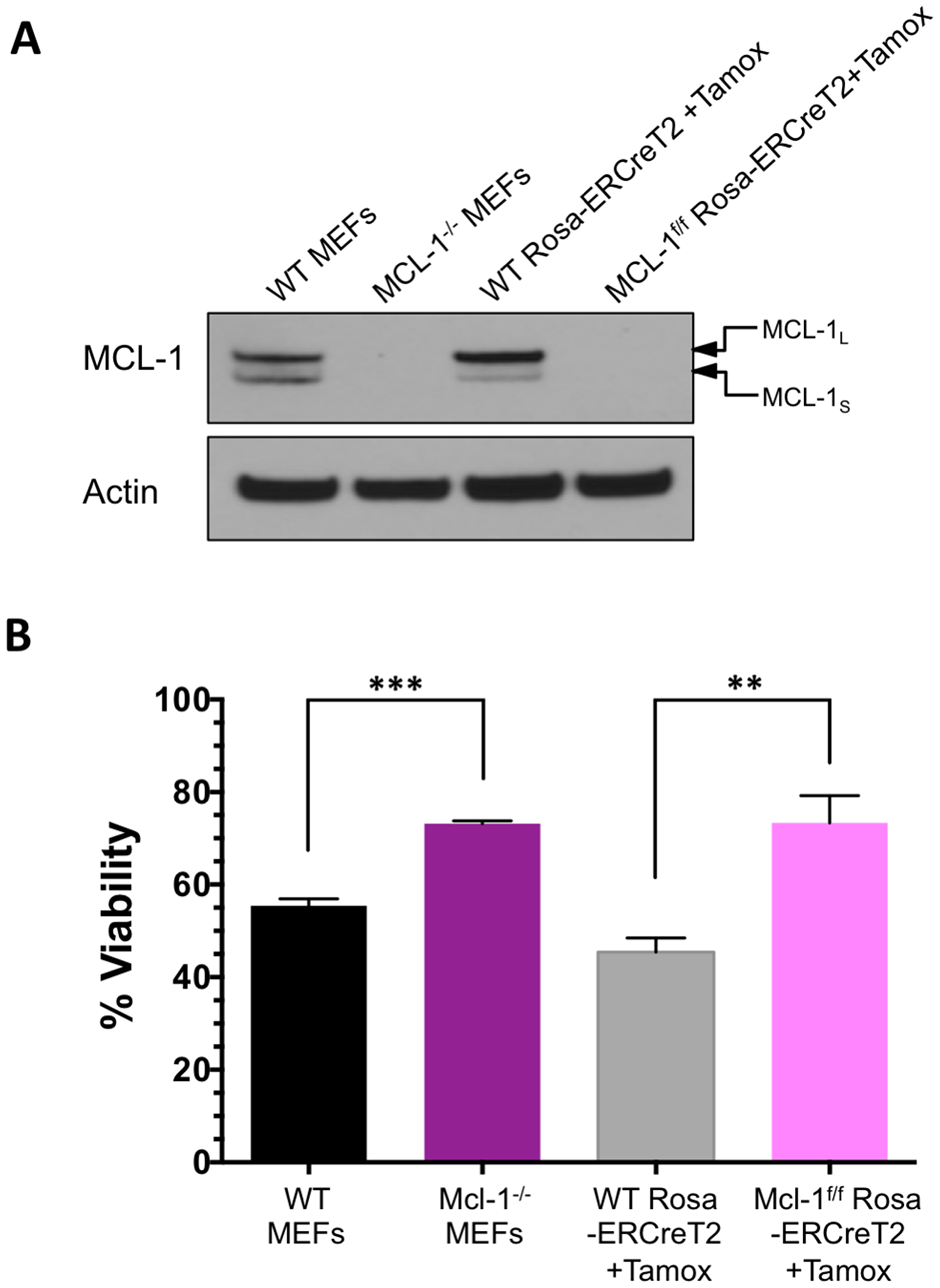Absence of MCL-1 leads to resistance against BIM SAHBA-induced apoptosis.