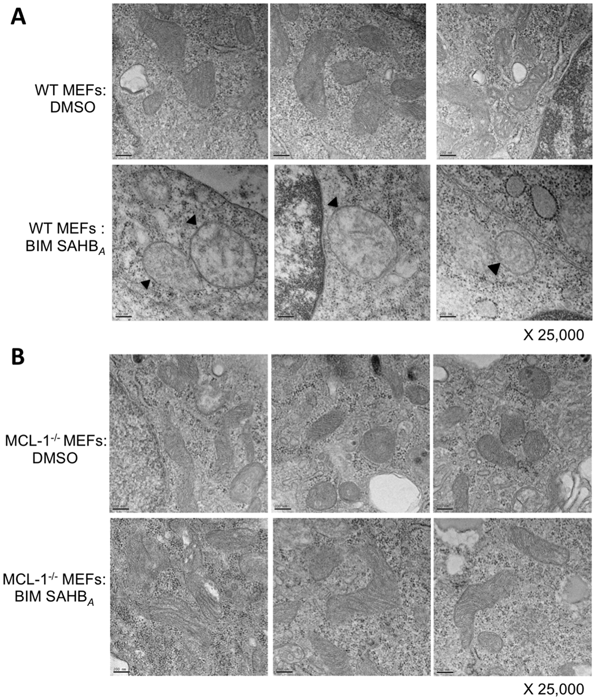 BIM SAHBA induces characteristic hallmarks of apoptosis at the level of the mitochondria in the presence of MCL-1.