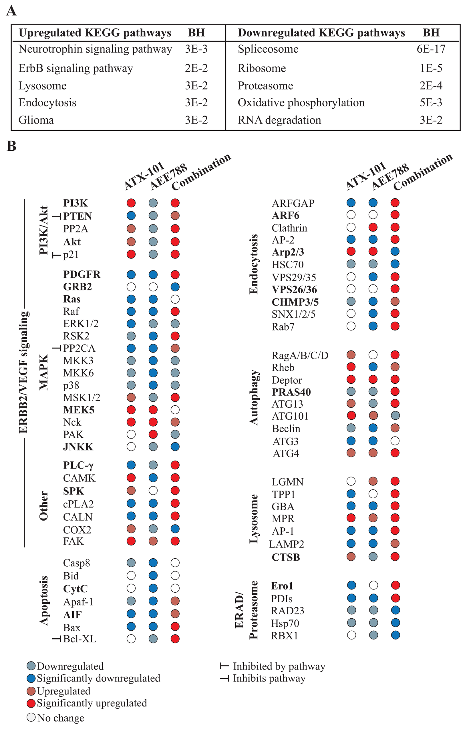 Multiple signaling proteins are differentially affected by the combination treatment than single AEE788 or ATX-101 treatments.