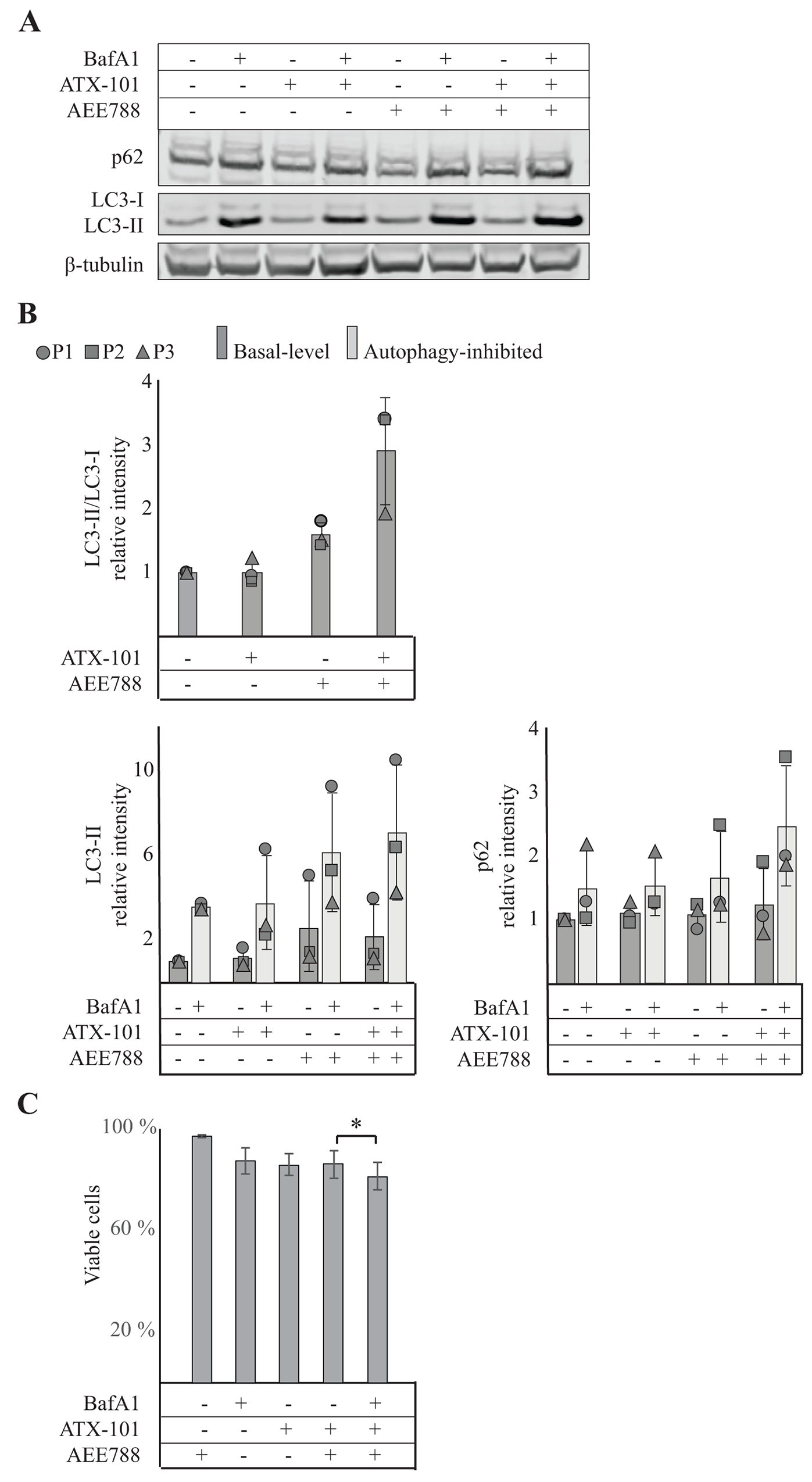 Combining ATX-101 with AEE788 treatment enhances autophagy.