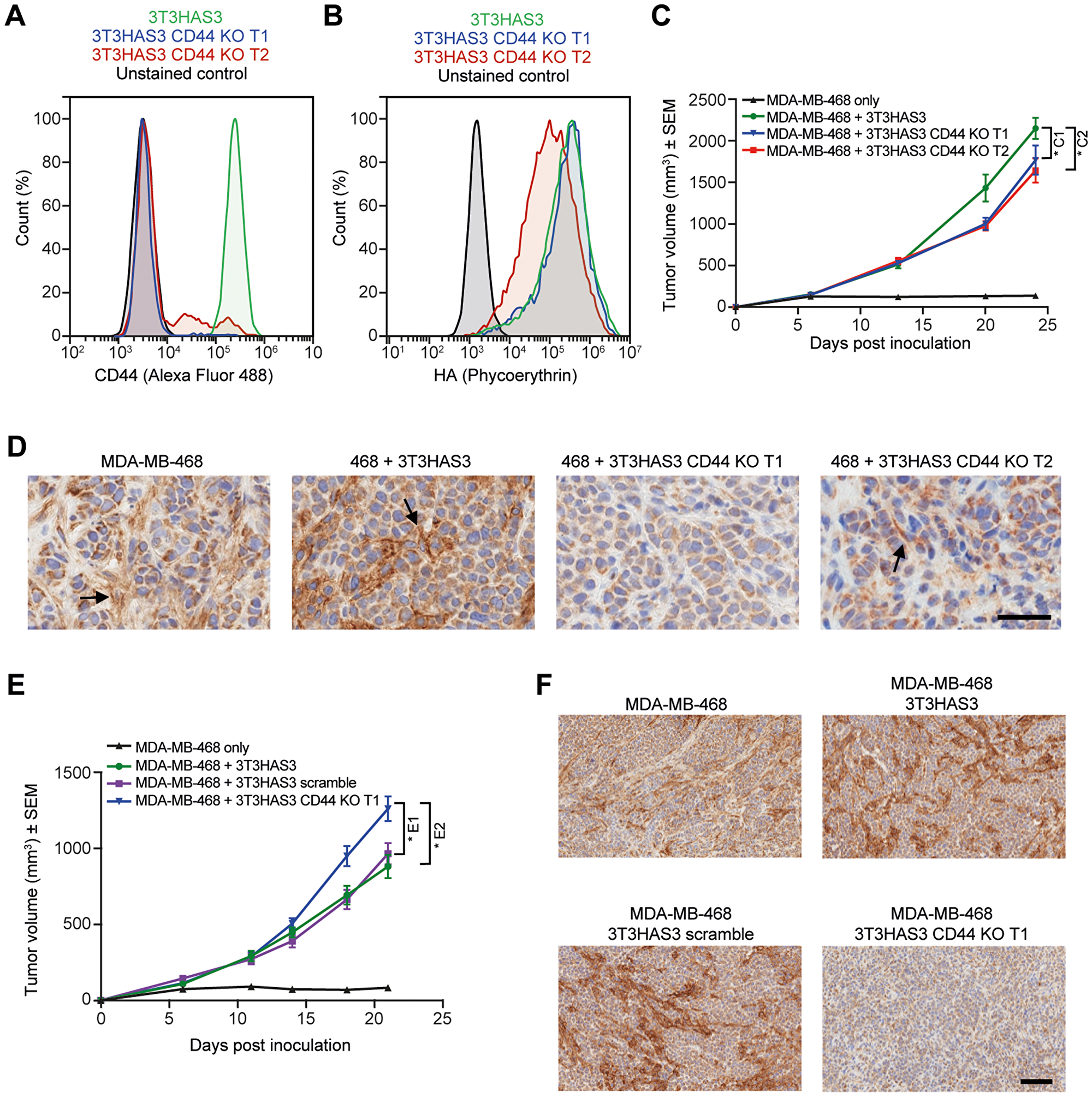 Tumor growth in the breast cancer co-graft model with HA-accumulating stroma was independent of CD44 expression in 3T3HAS3 fibroblast cells.