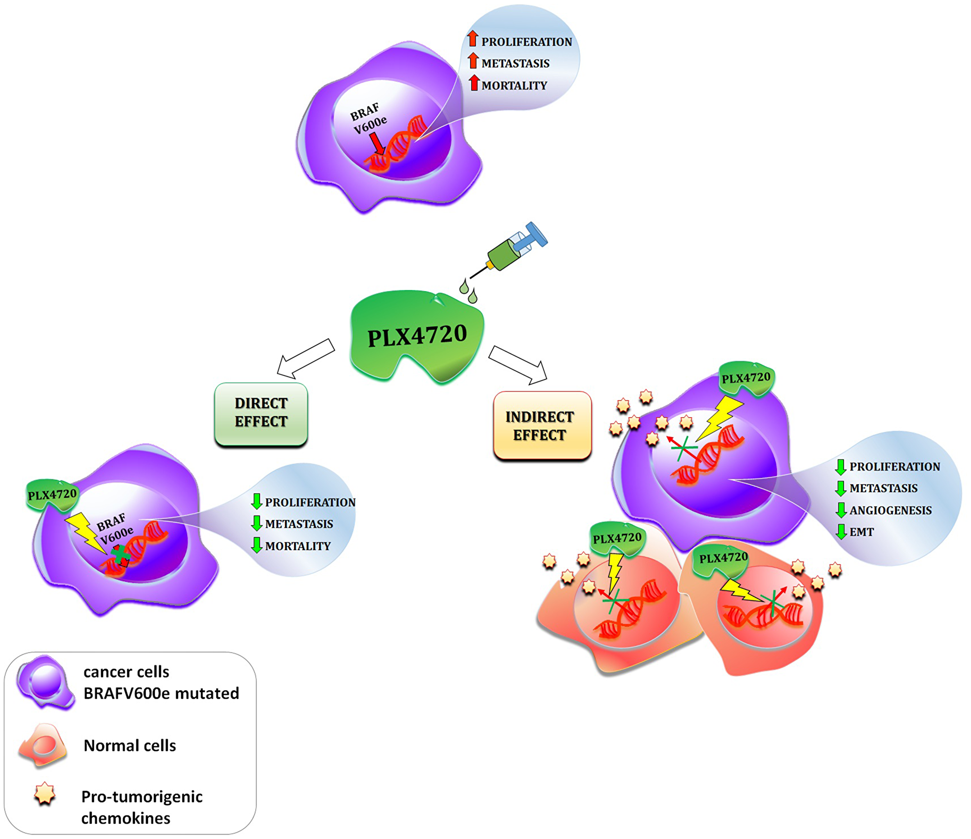 Schematic description of the direct and indirect effects of a given BRAF-inhibitor (PLX4720) in cancer.
