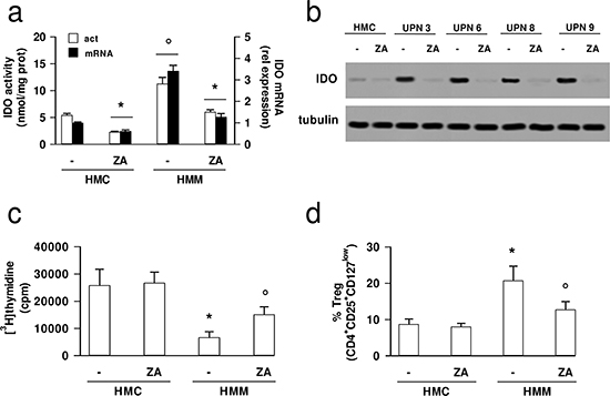 Zoledronic acid down-regulates IDO expression in mesothelioma cells and inhibits the tumor-induced immunosuppression.