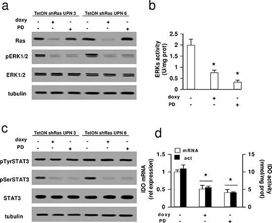 Effects of Ras/ERK1/2 inhibition on STAT3 phosphorylation and IDO expression in mesothelioma cells.