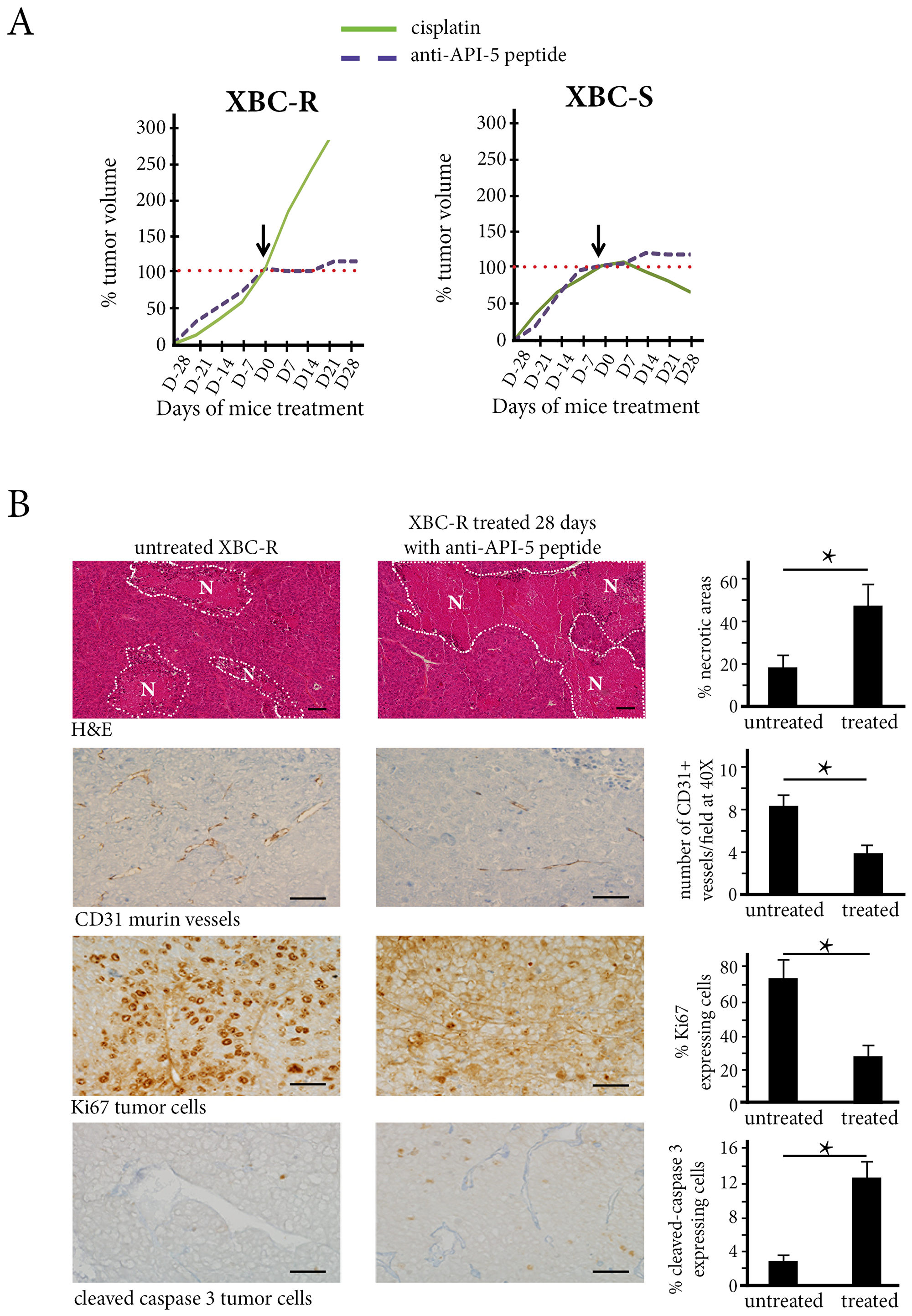The in vivo effect of Cisplatin and API-5 peptide in XBC-R (left panel) and XBC-S (right panel).