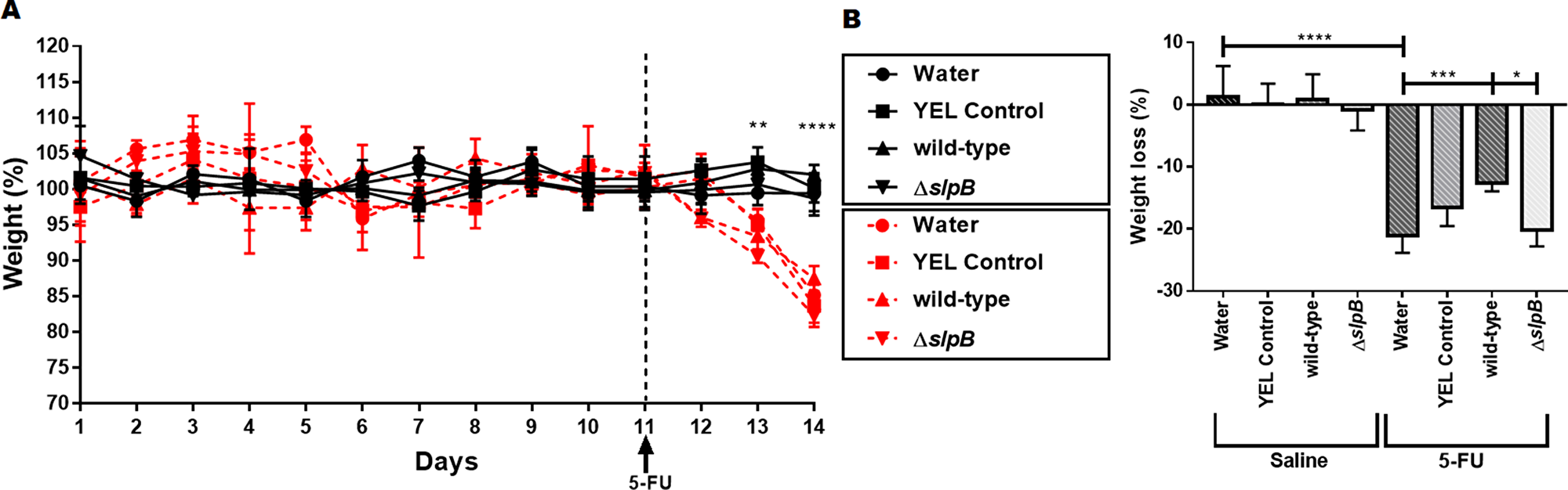 Propionibacterium freudenreichii WT strain prevents weight loss in 5-FU-treated mice.