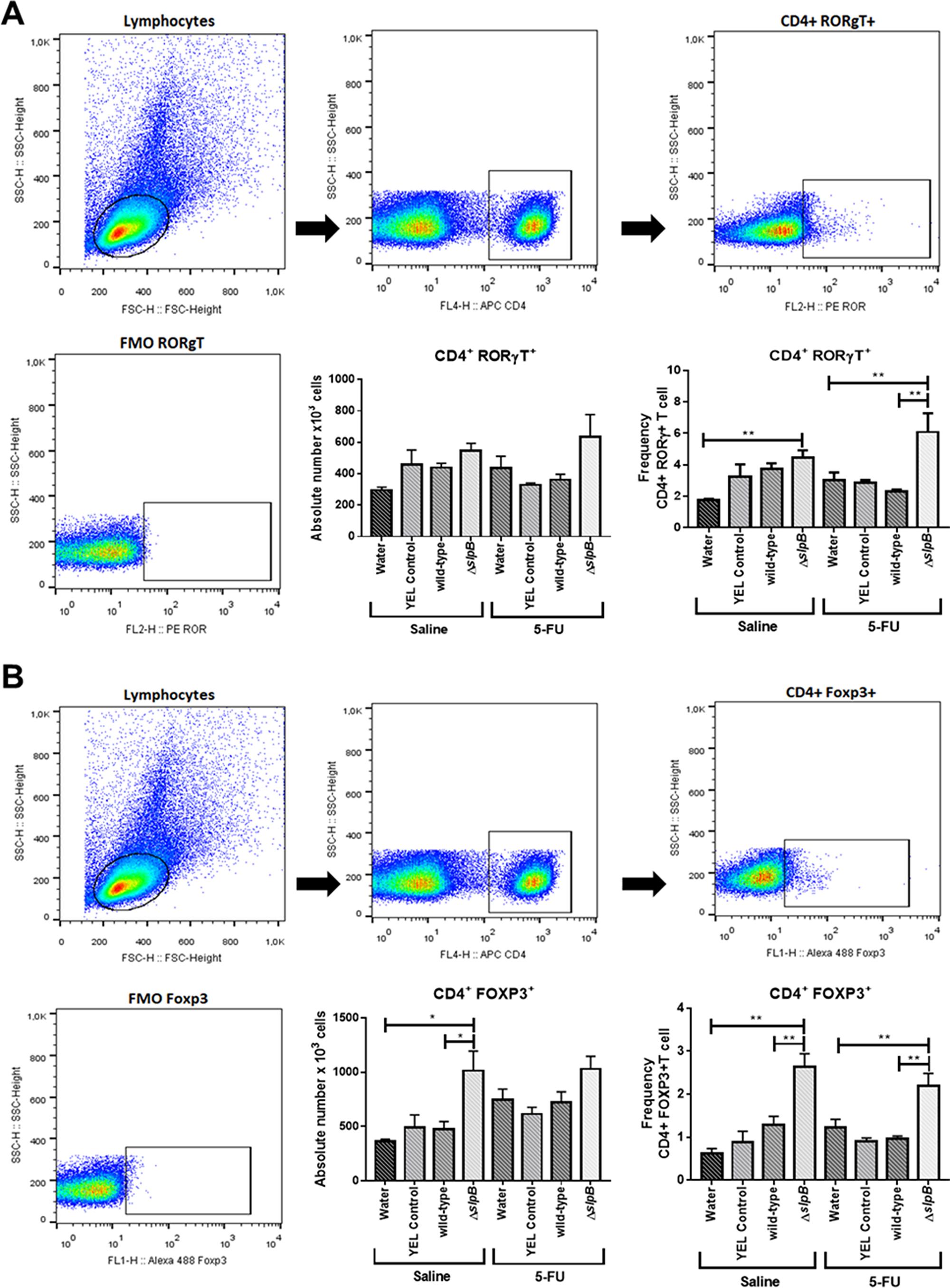 Propionibacterium freudenreichii ΔslpB mutant strain induces T lymphocyte production in mice spleen after 5-FU-induced mucositis.