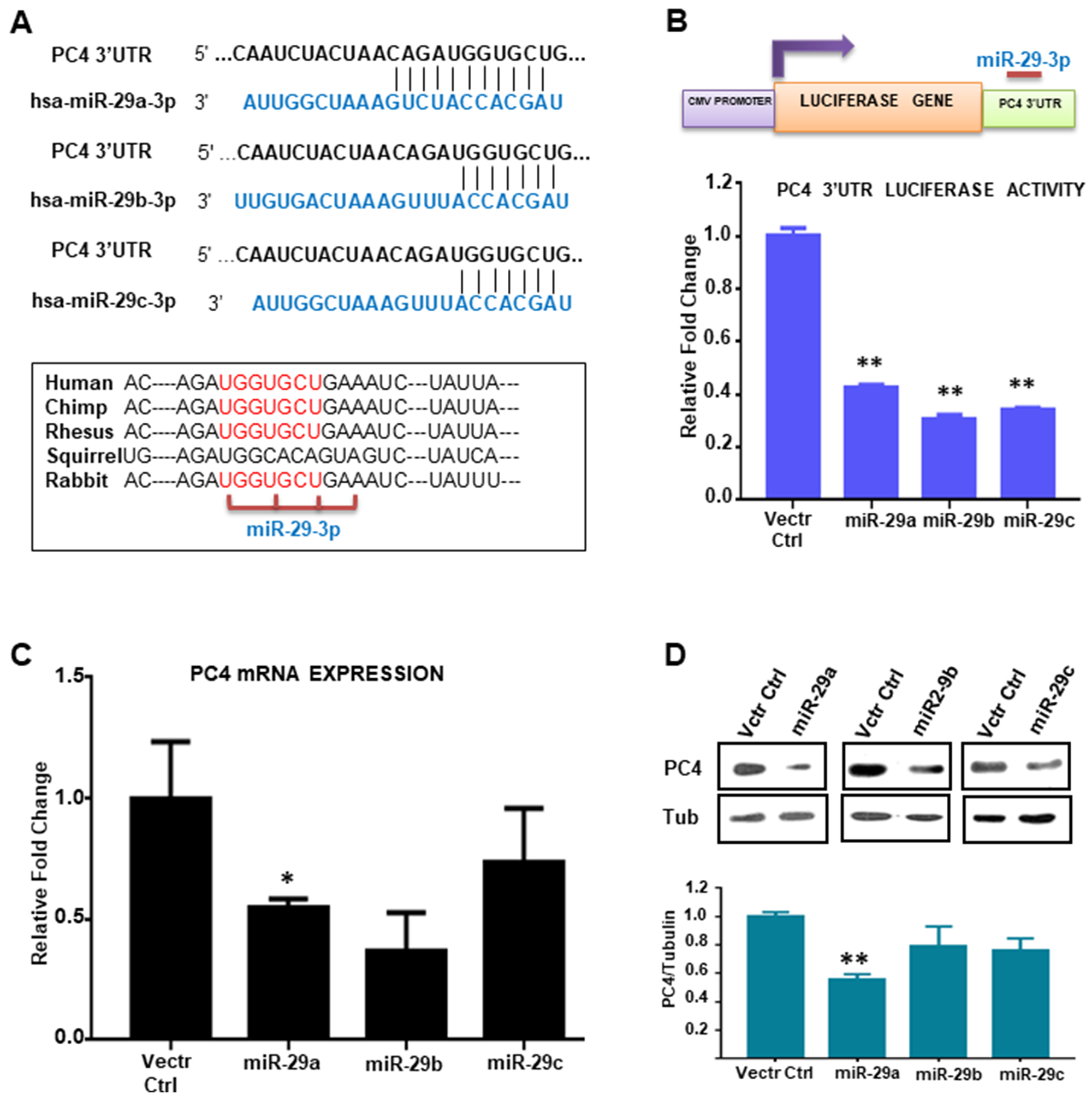 miR-29 targets and downregulates PC4 expression.