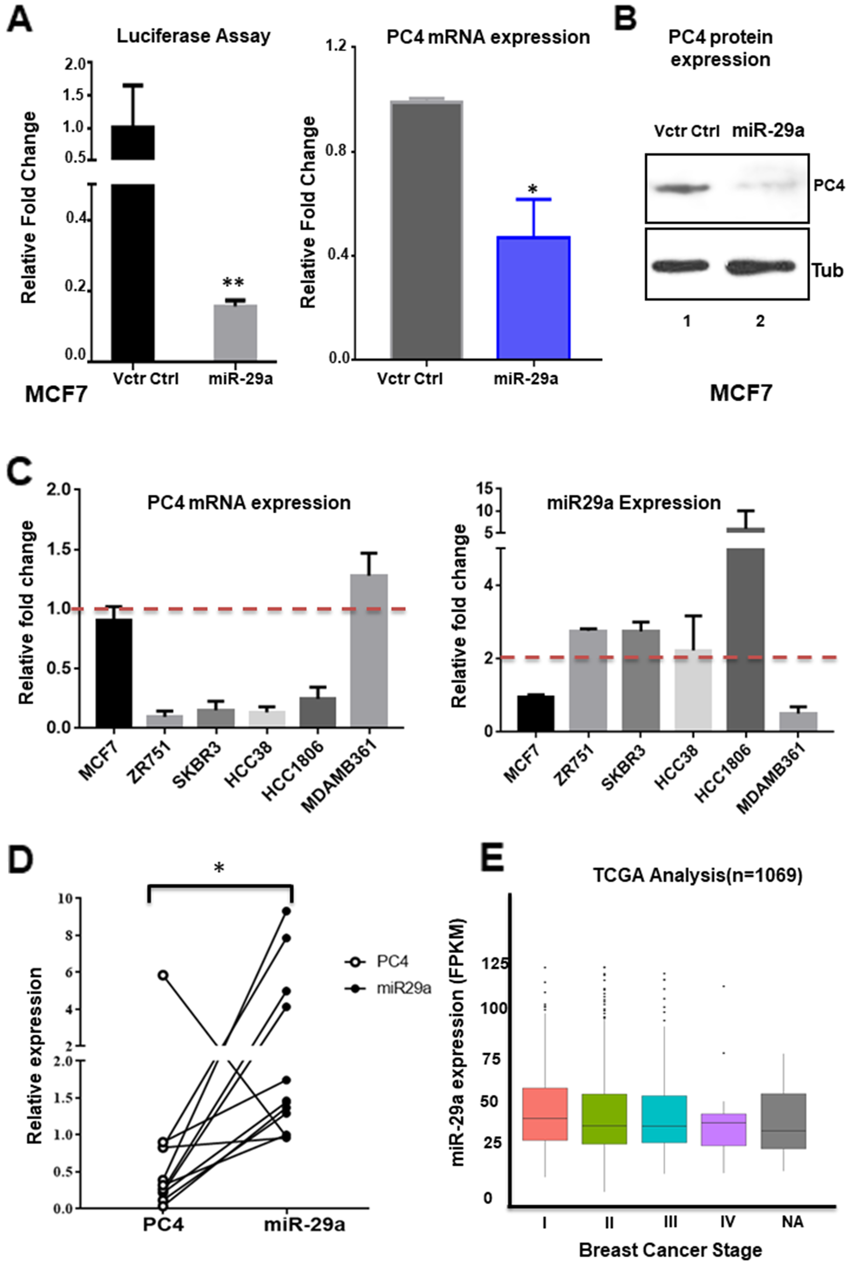 miR-29 modulates PC4 expression in Breast cancer cells.