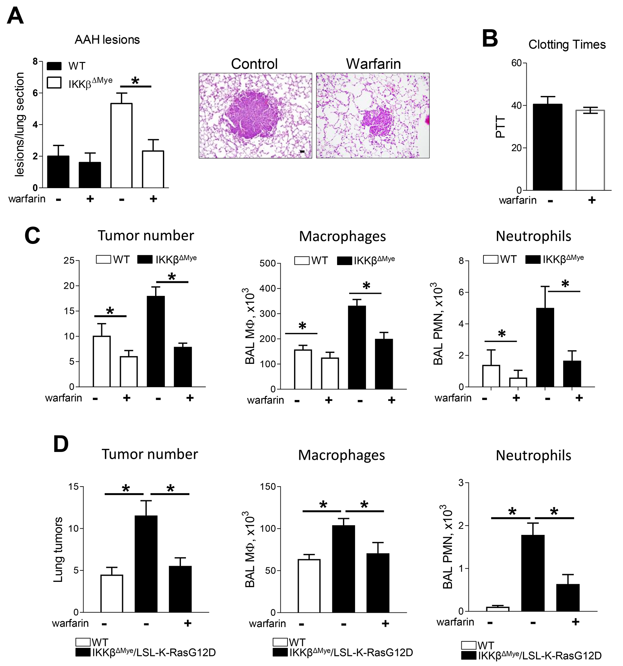 Warfarin treatment decrease lung tumor in urethane model and Kras spontaneous mouse tumor model of lung tumorigenesis.
