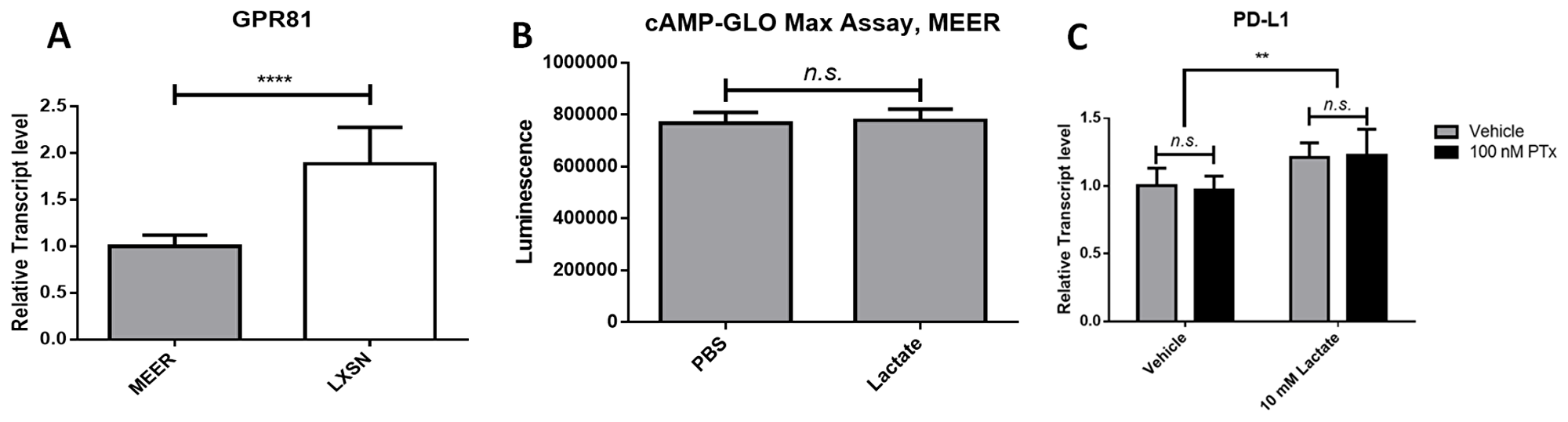 Lactate-induced PD-L1 in MEER cells does not depend on GPR81 signaling.