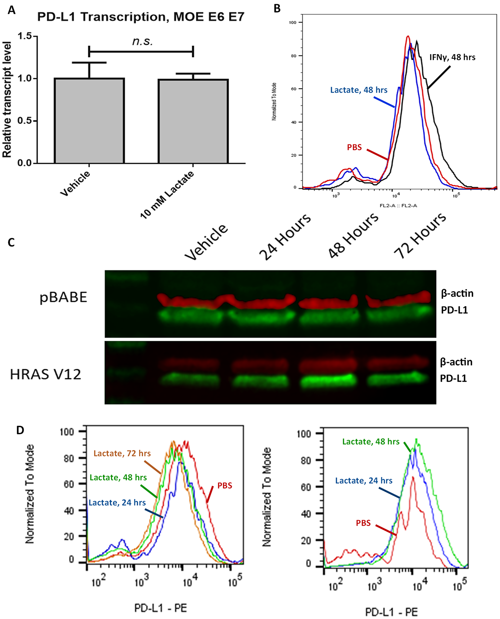 Lactate-induced expression of PD-L1 relies on HRASG12V expression.