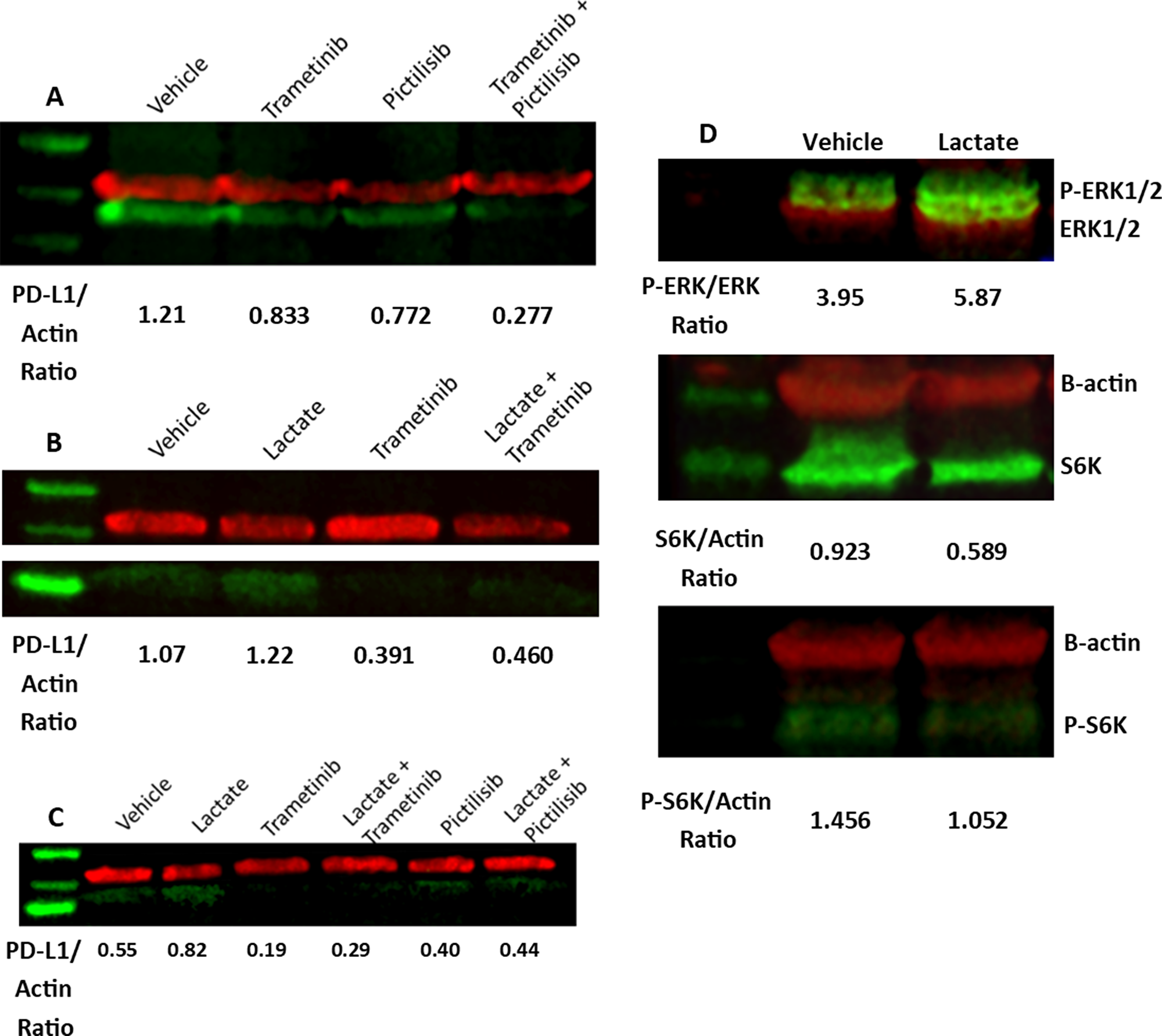 MEK activity contributes to PD-L1 expression.