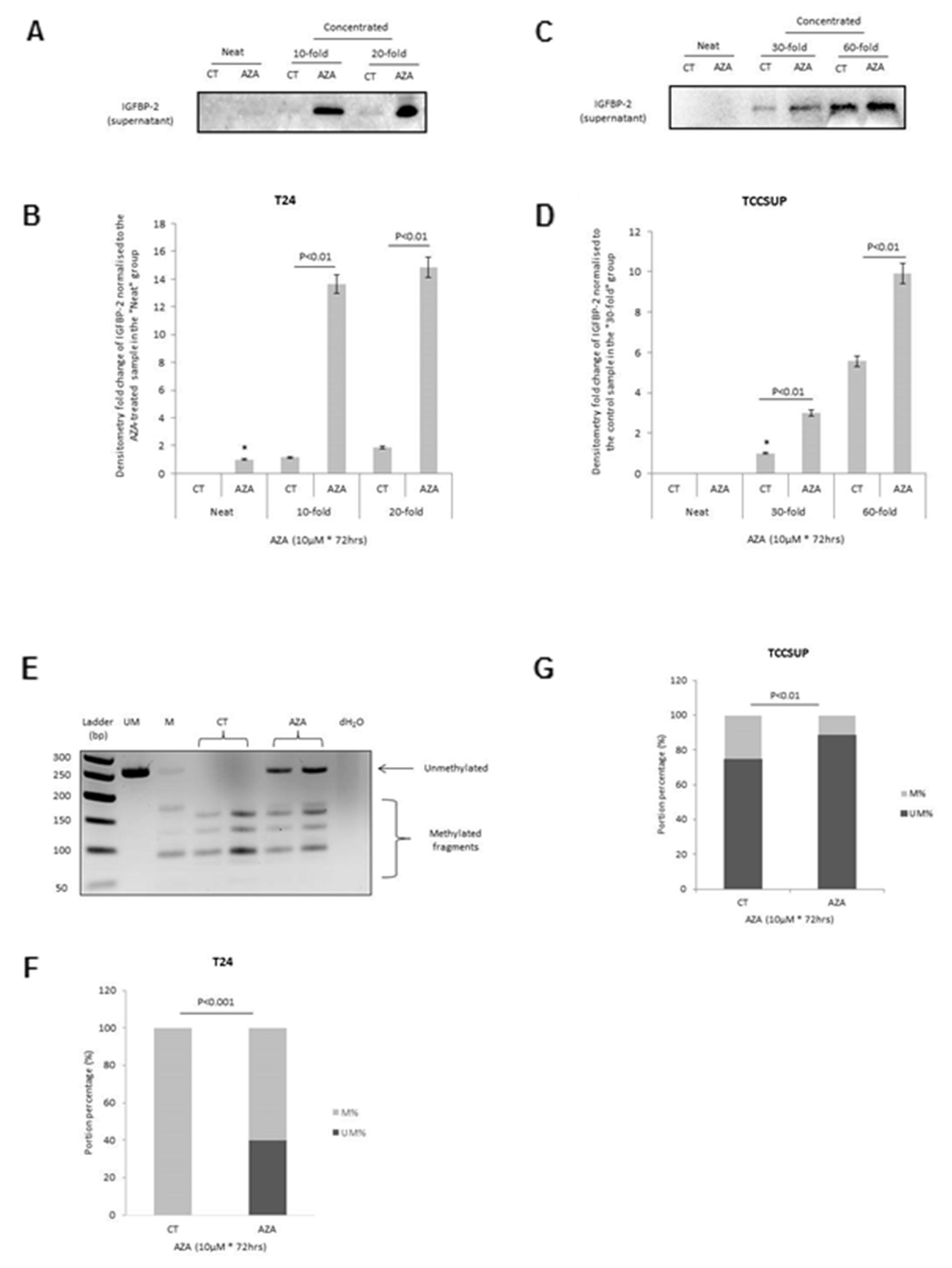 Effect of 5-AZA on the abundance and methylation status of the IGFBP-2 gene promoter.