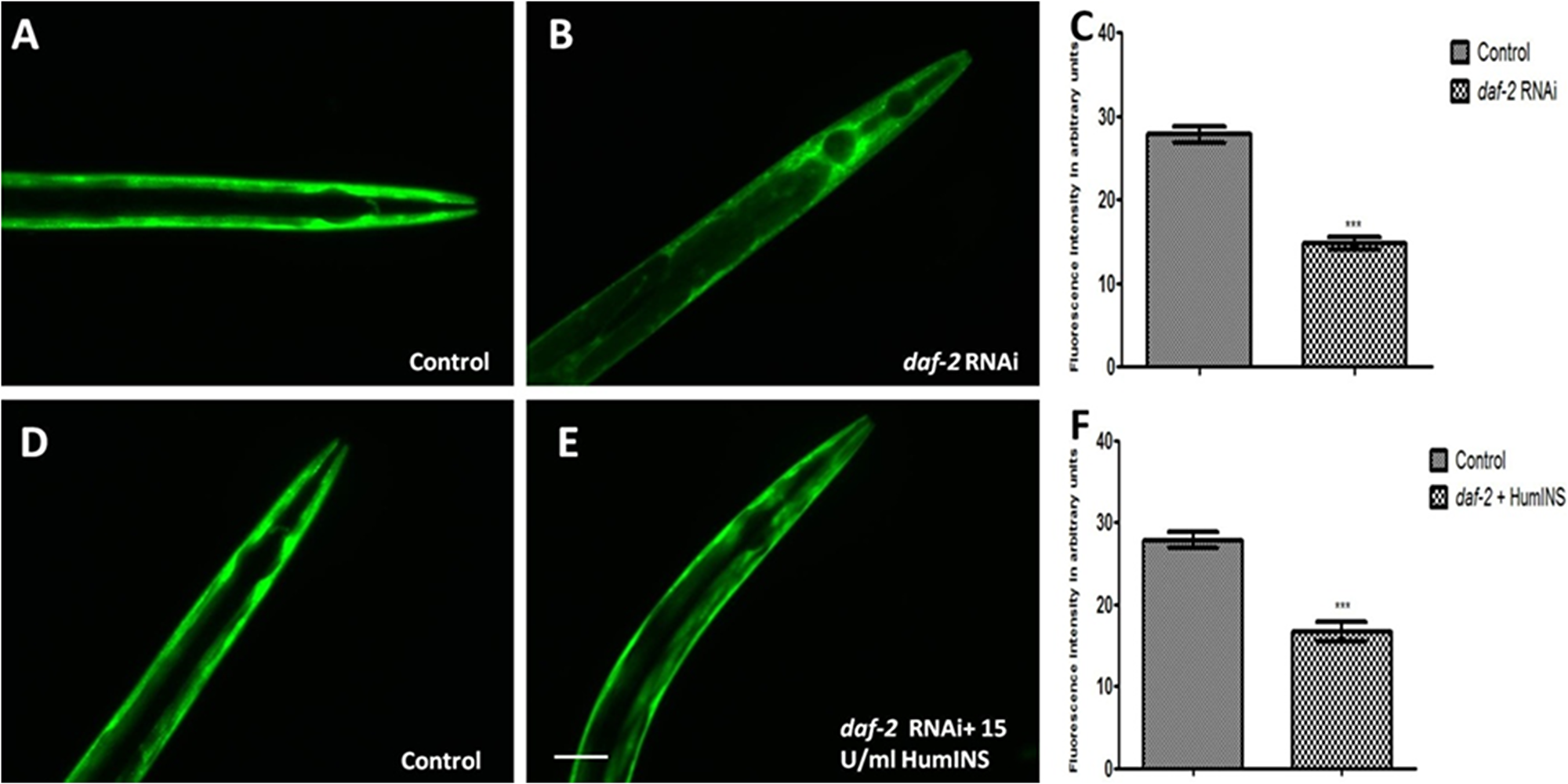 HumINS acts via DAF-2 receptor based signalling in reducing α-syn expression.