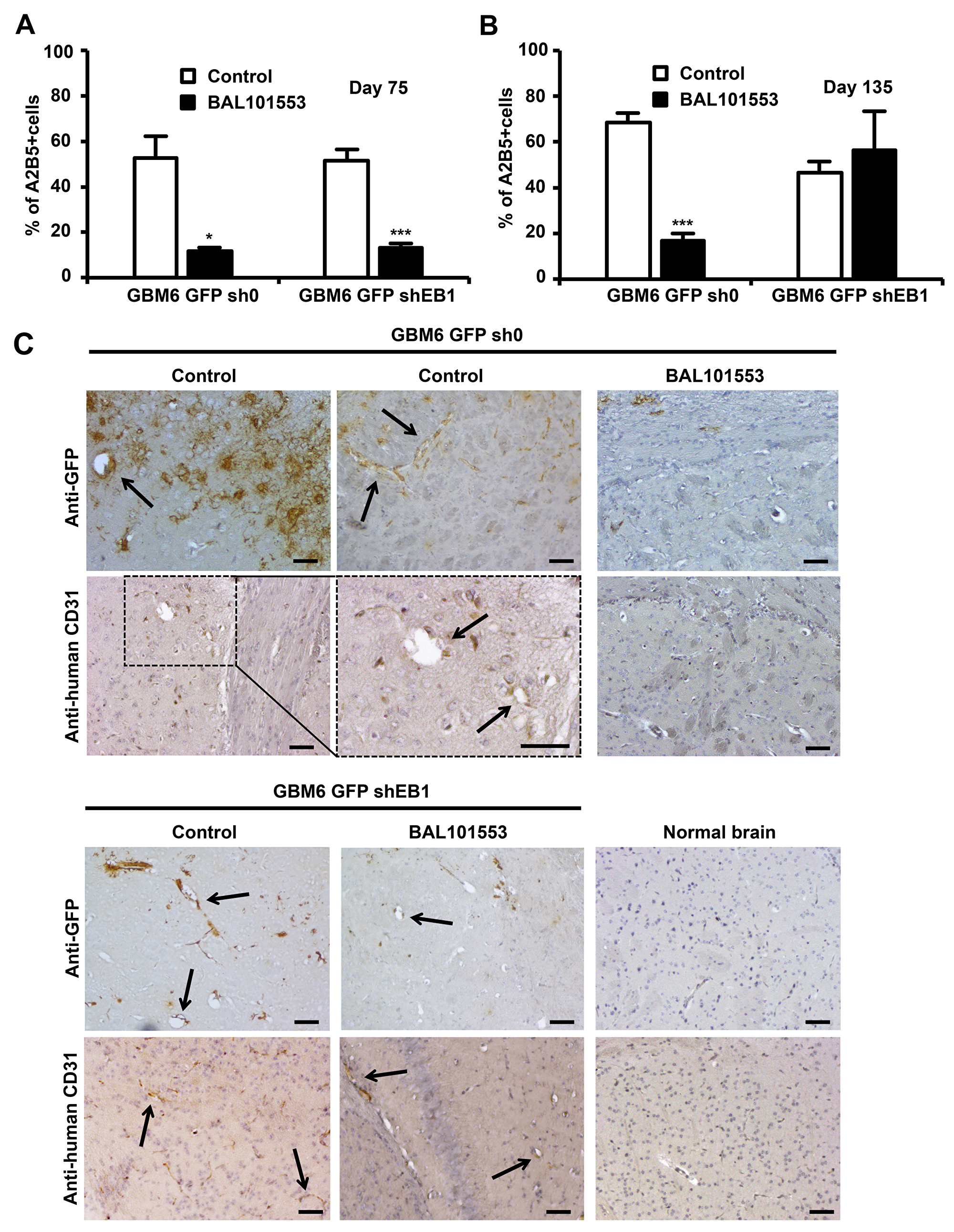 BAL101553 induces loss of stem cell properties and inhibits tumor vasculature.