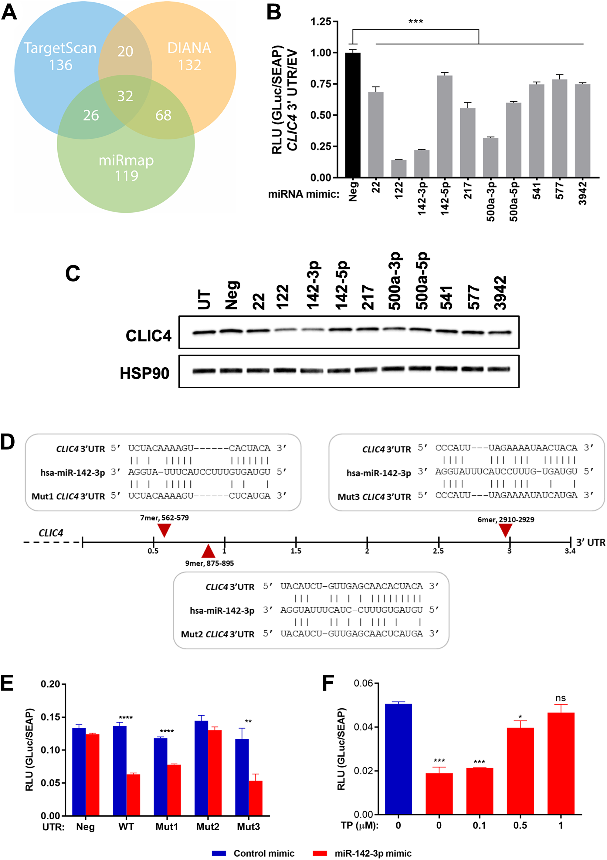 miR-142-3p targets CLIC4 by recognizing a specific site in the CLIC4 3′UTR.