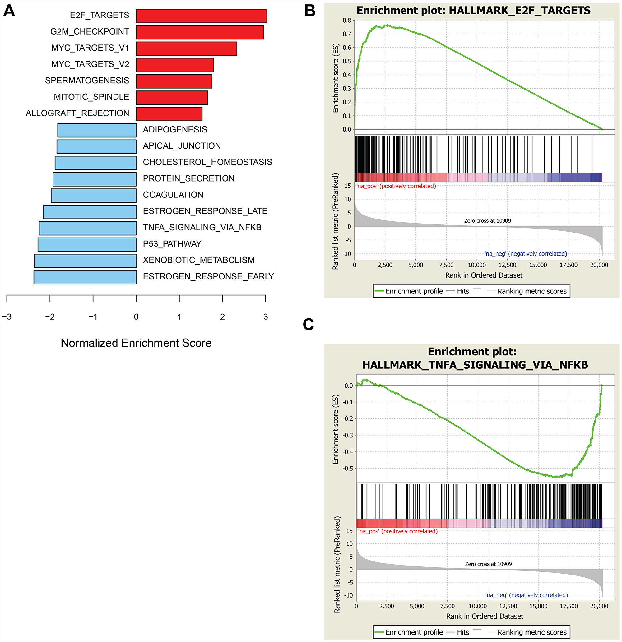 GSEA of genes associated with sensitivity or resistance to prexasertib in pan-cancer cell line panel.