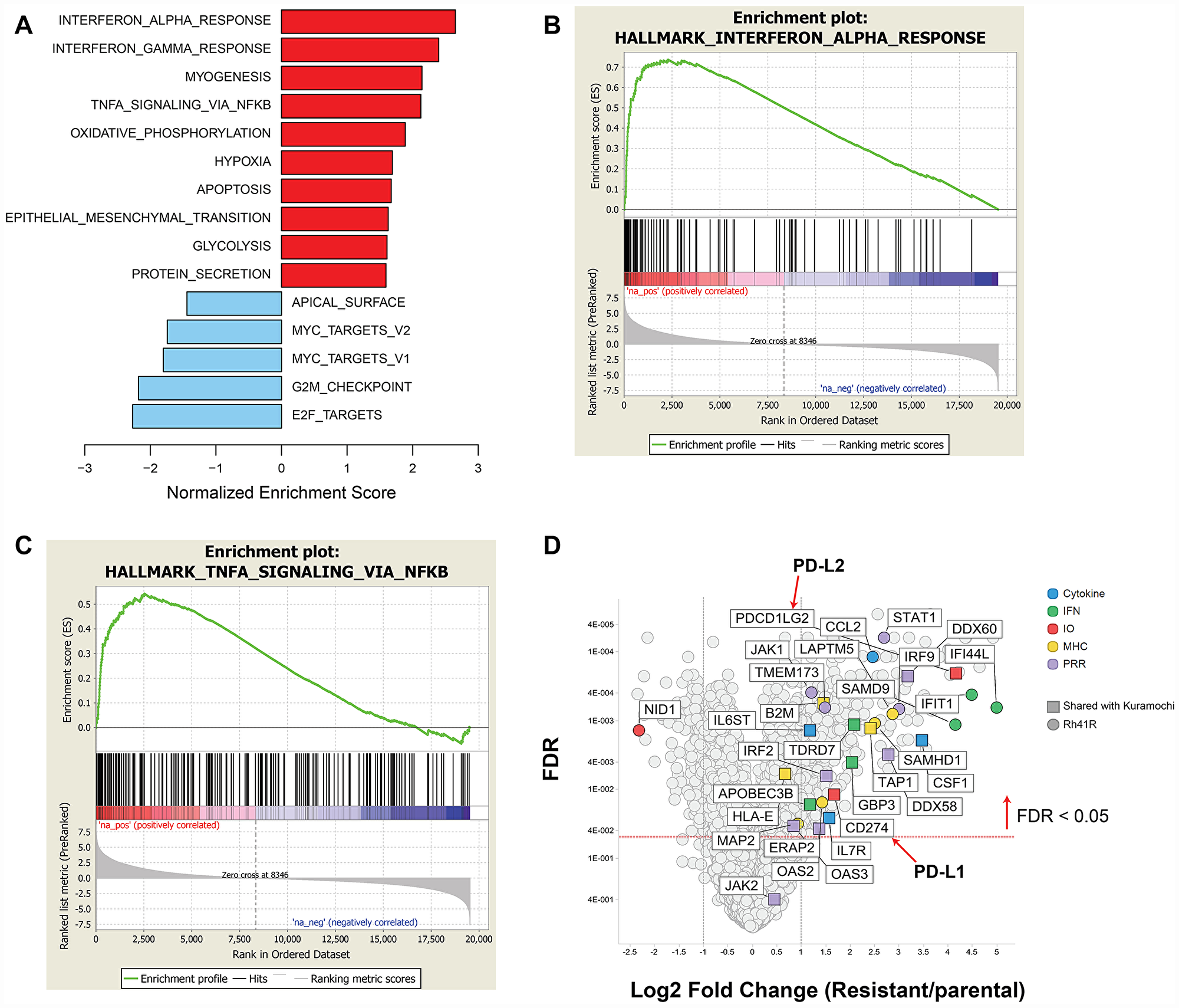 GSEA of differentially expressed genes in prexasertib-resistant aRMS Rh41R compared to parental Rh41 cells.