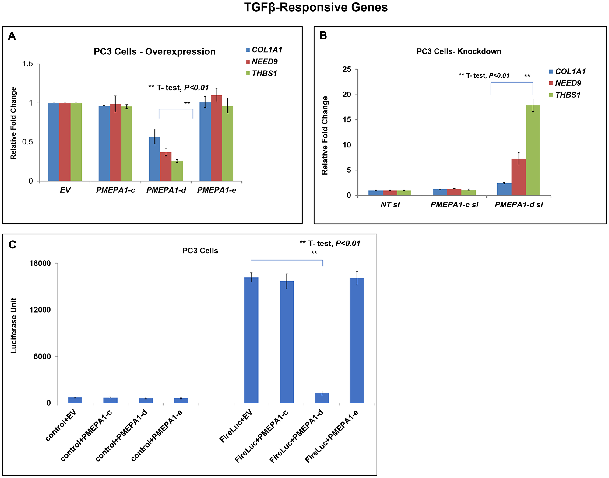 PMEPA1-d isoform inhibited TGF-β signaling in PC3 cells.