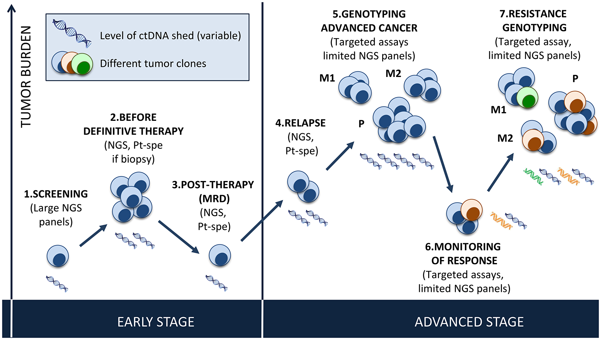 Potential use of plasma genotyping in cancer.