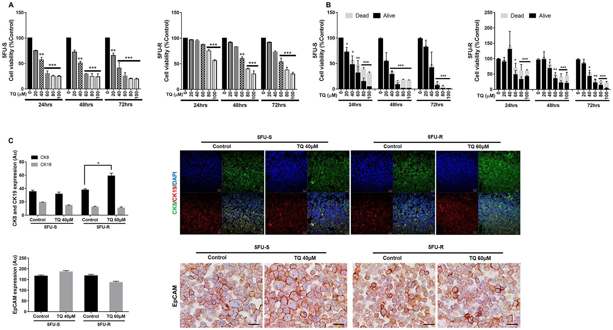 TQ reduces viability of 5FU-sensitive and 5FU-resistant HCT116 colorectal cancer cells.