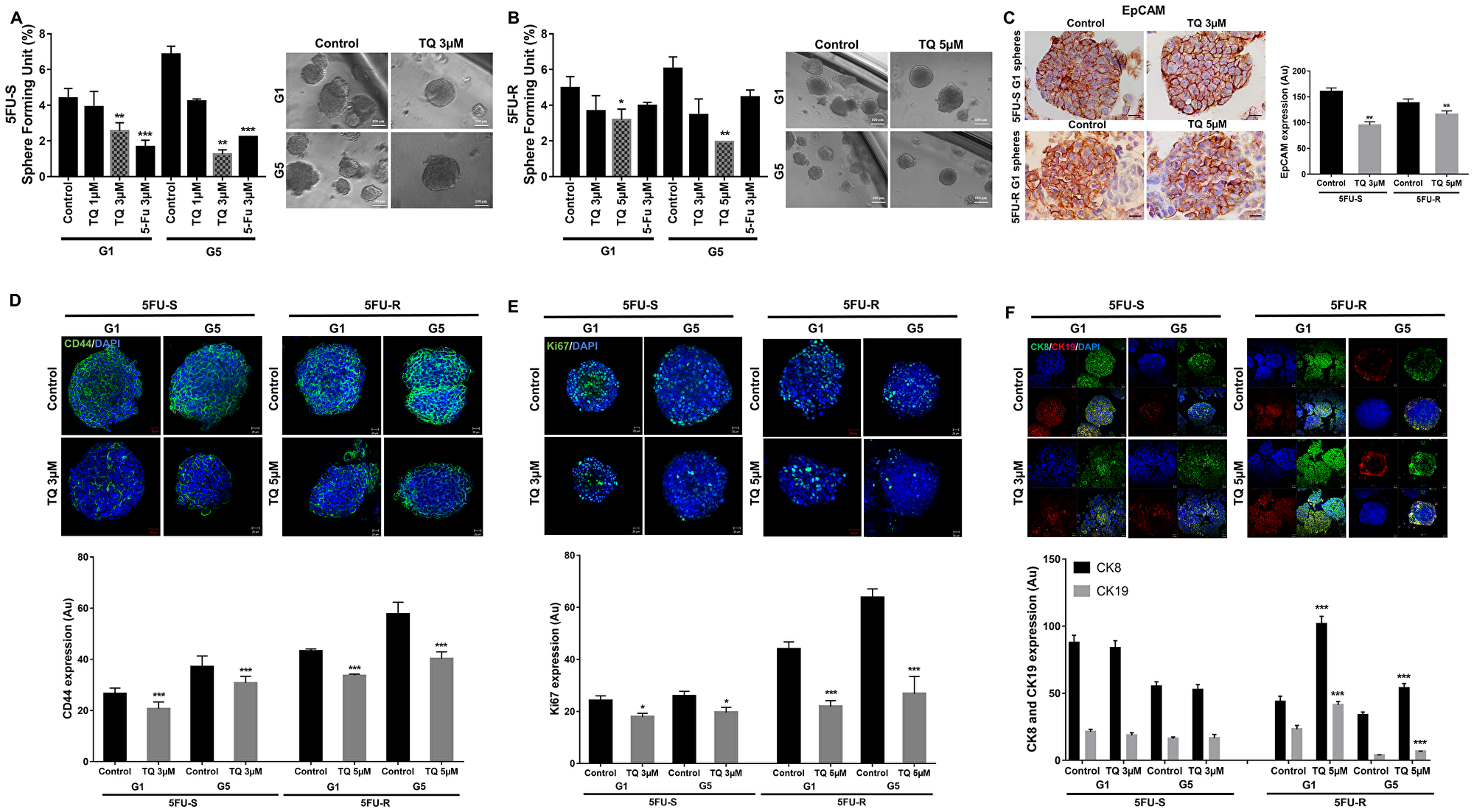 TQ reduces sphere-forming and self-renewal ability of colon cancer stem/progenitor cells.
